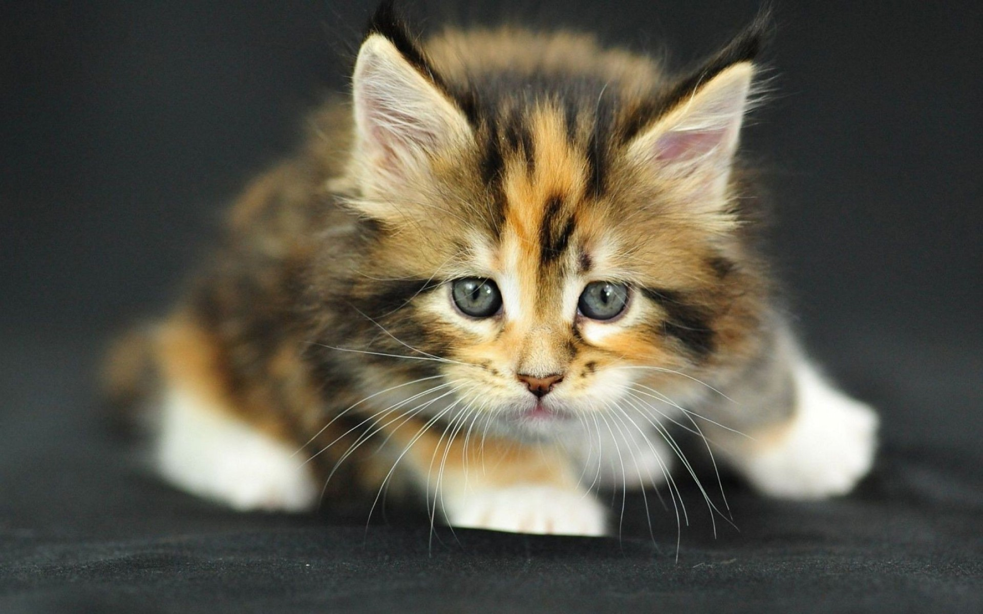 cute kitten pictures wallpaper (60+ images)