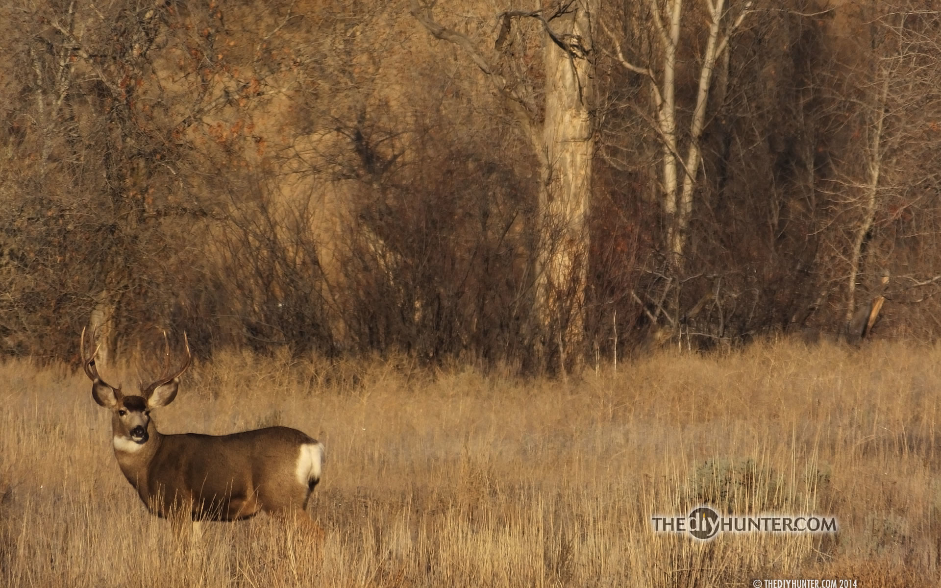 Bow hunting wallpaper 63 images - Free deer hunting screensavers ...