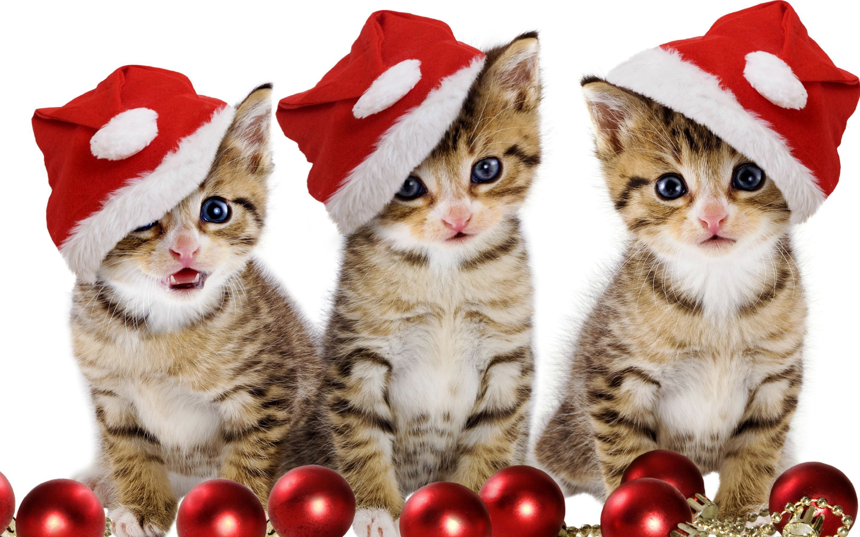 2880x1800 Christmas Kitten Wallpaper Cats Animals (46 Wallpapers) – HD Wallpapers