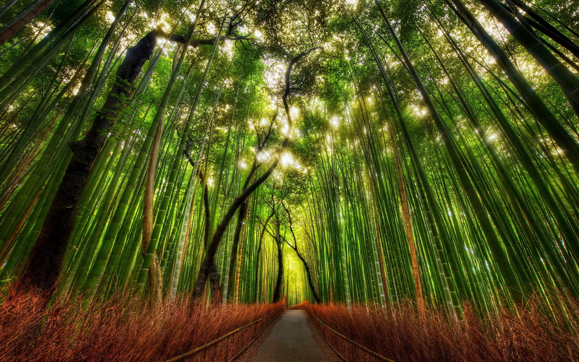 1920x1200 Forest Bamboo HD Desktop Wallpaper, Background Image
