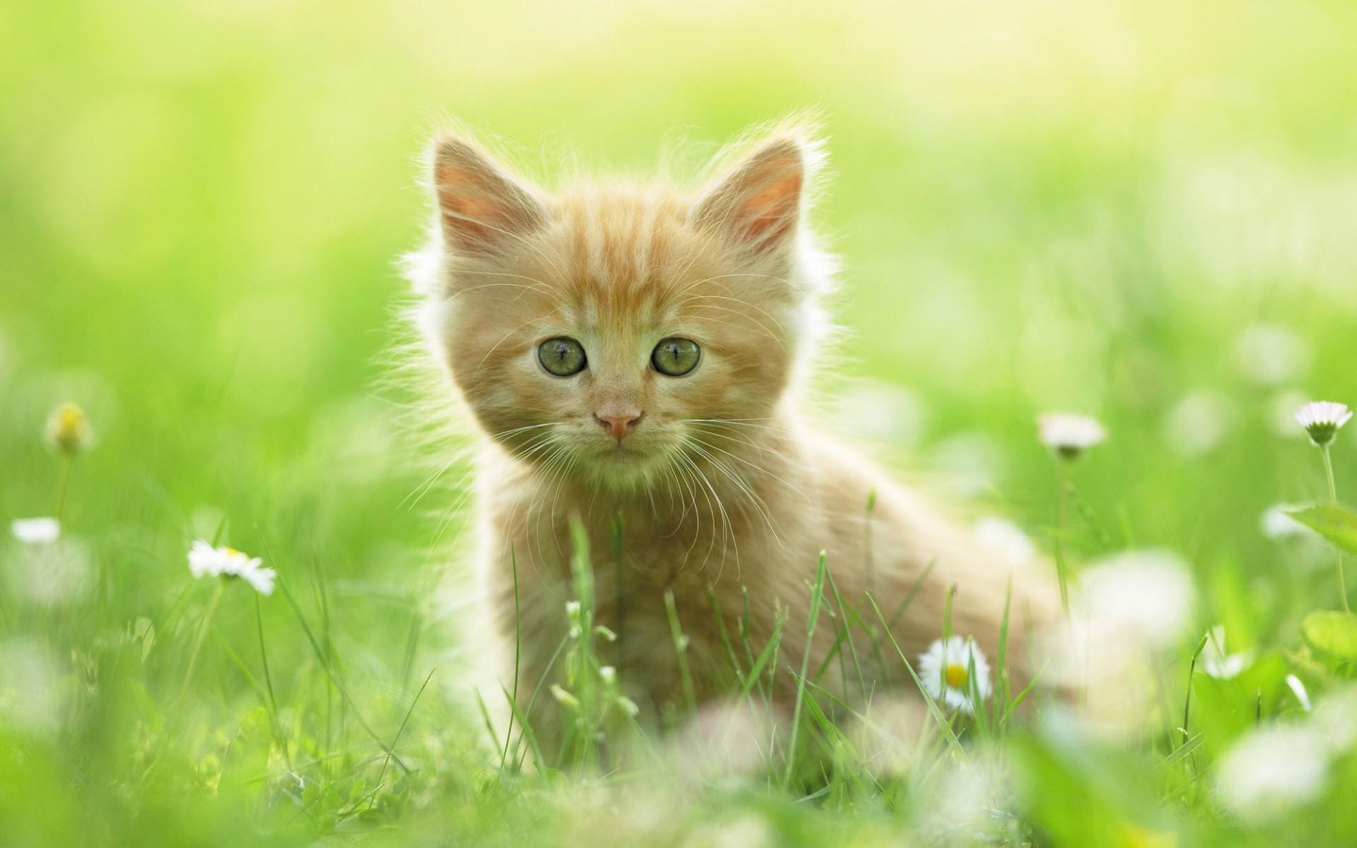 2400x1800 Beautiful Creative Cute Persian Kitty Kitten With Flowers Hd Wallpaper Desktop