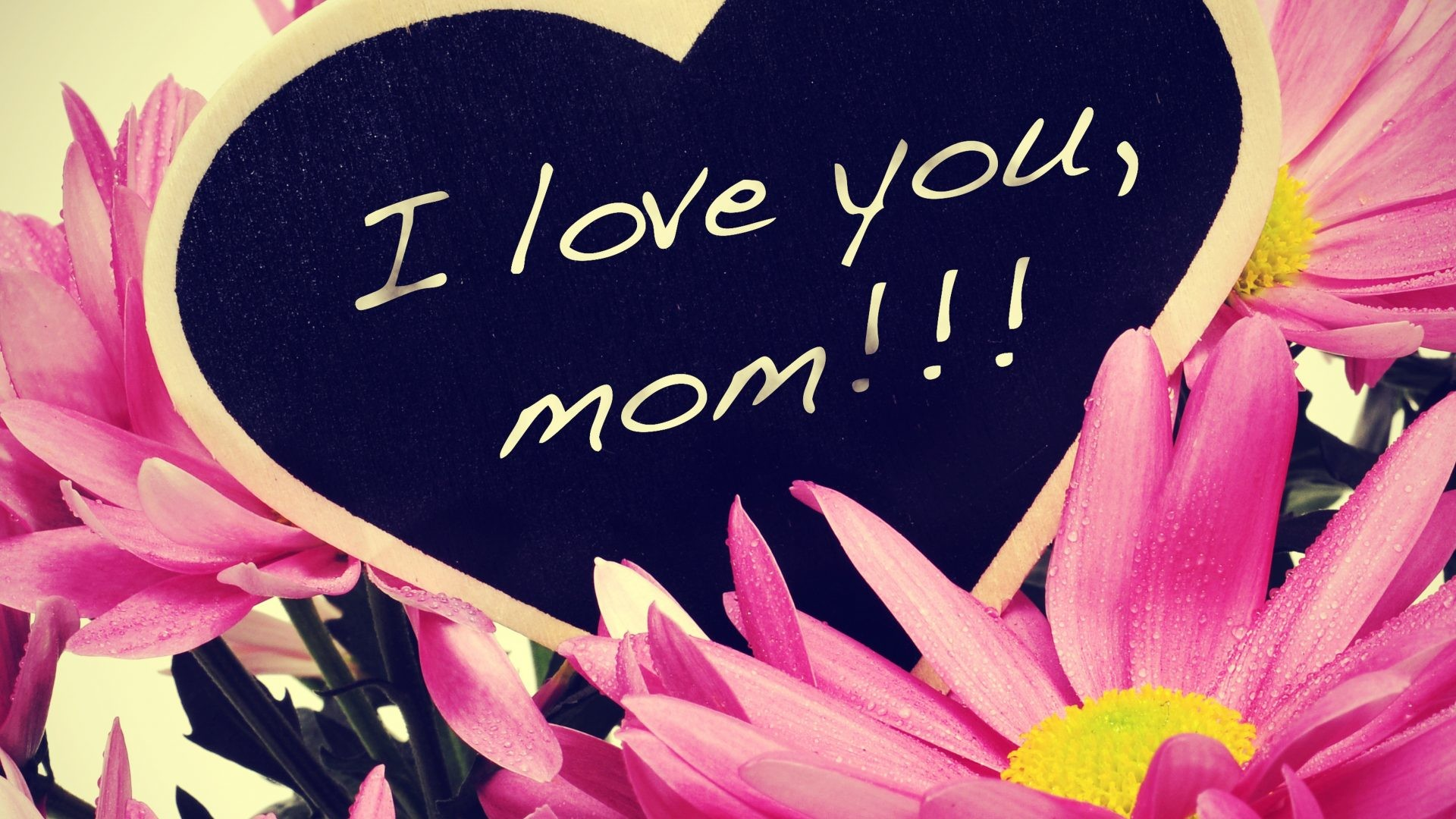 1920x1080 Mom Tag - Daisy Daisies Flowers Mom Nature Love Flower Wallpaper For Iphone  5c for HD