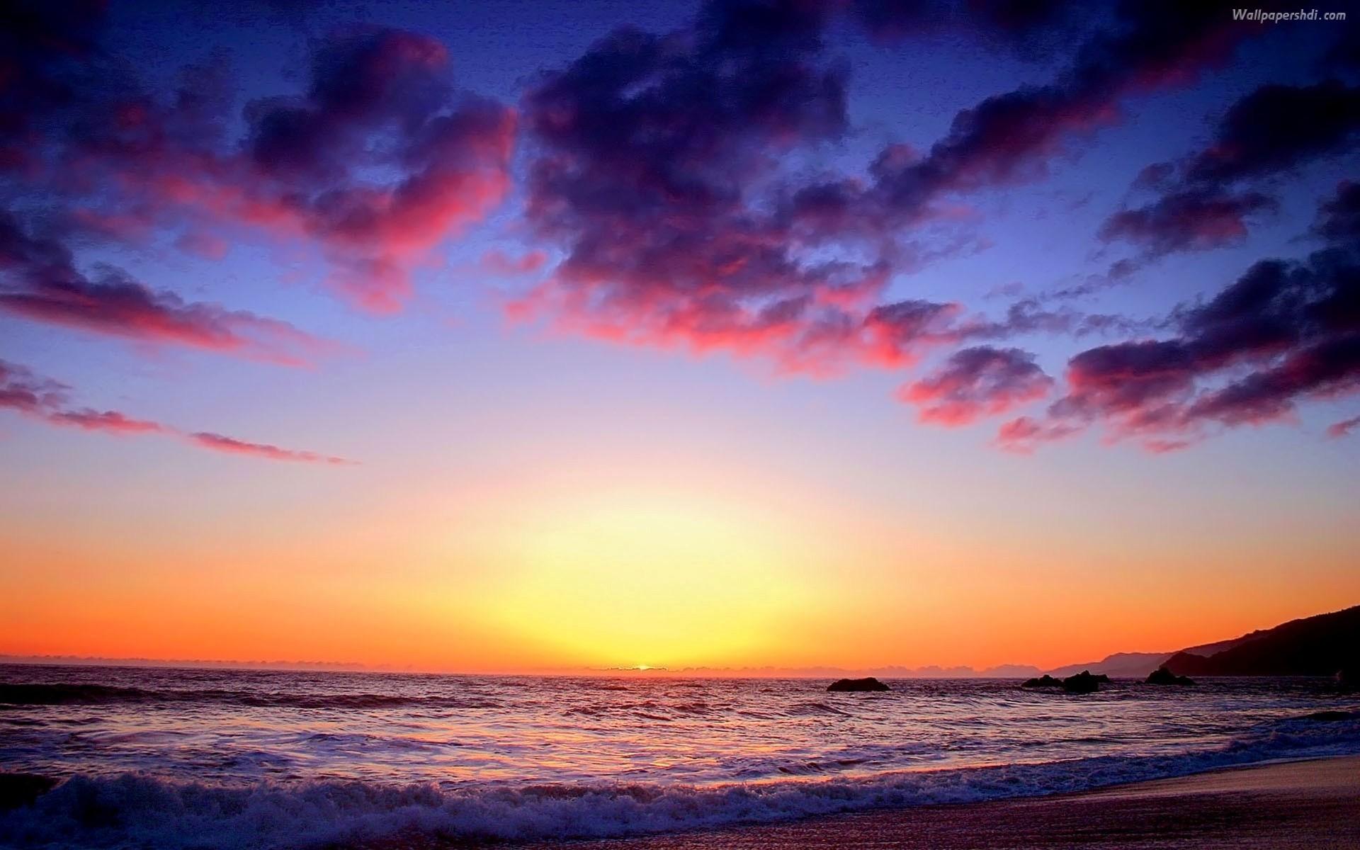 2560x1600 Bird Silhouettes In The Beach Sunset Wallpaper HD Desktop