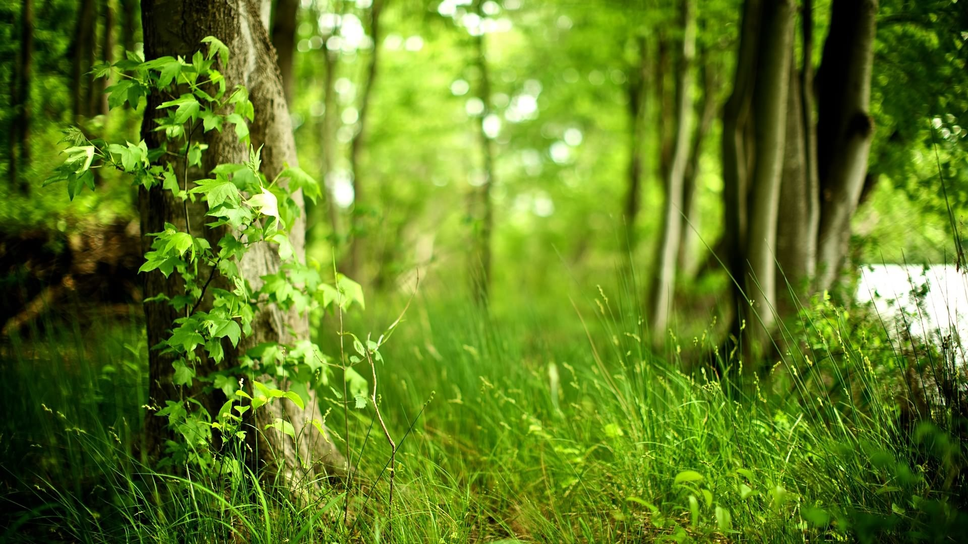 forest green background (47+ images)
