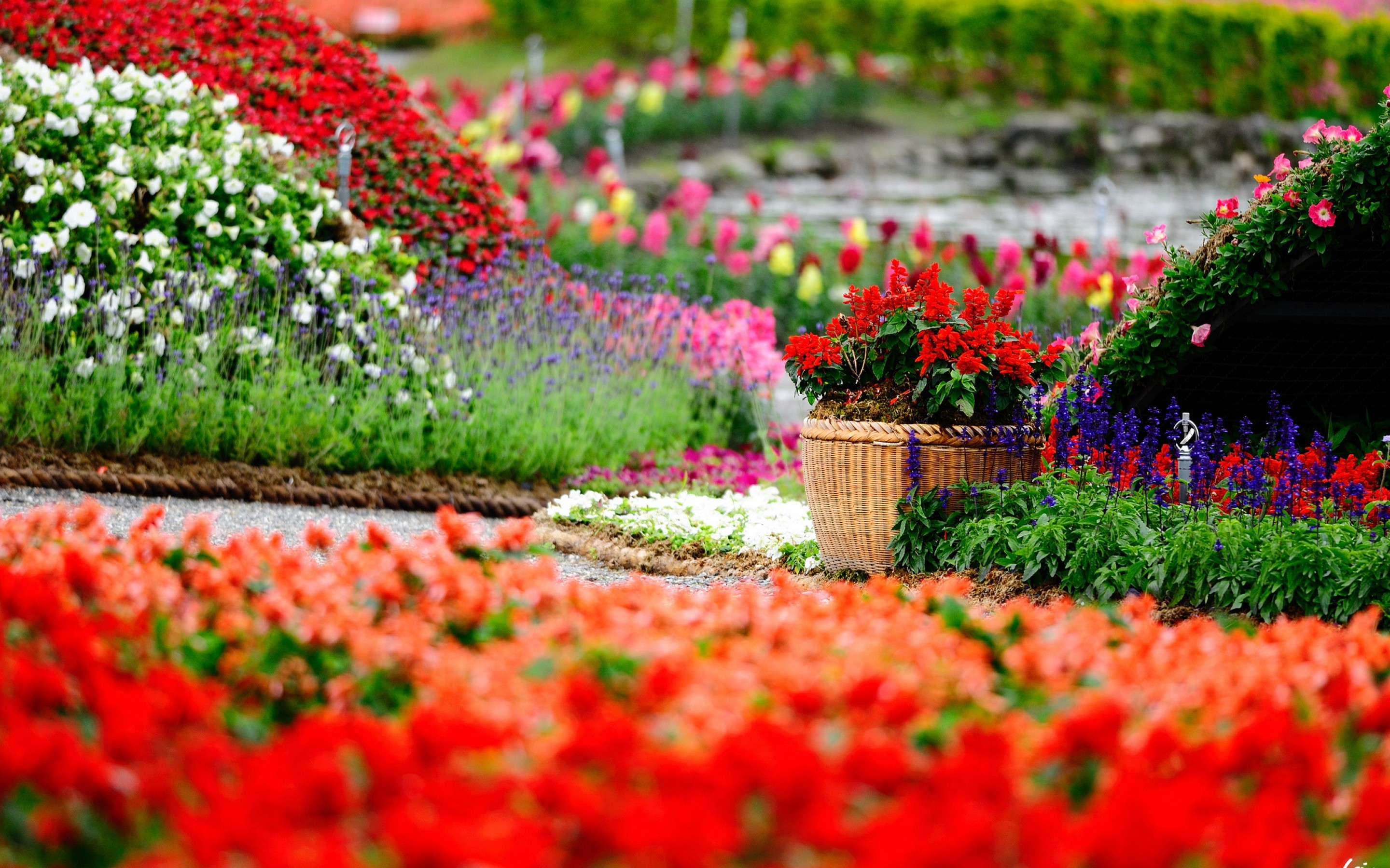 Flower Gardens Wallpapers 59 Images
