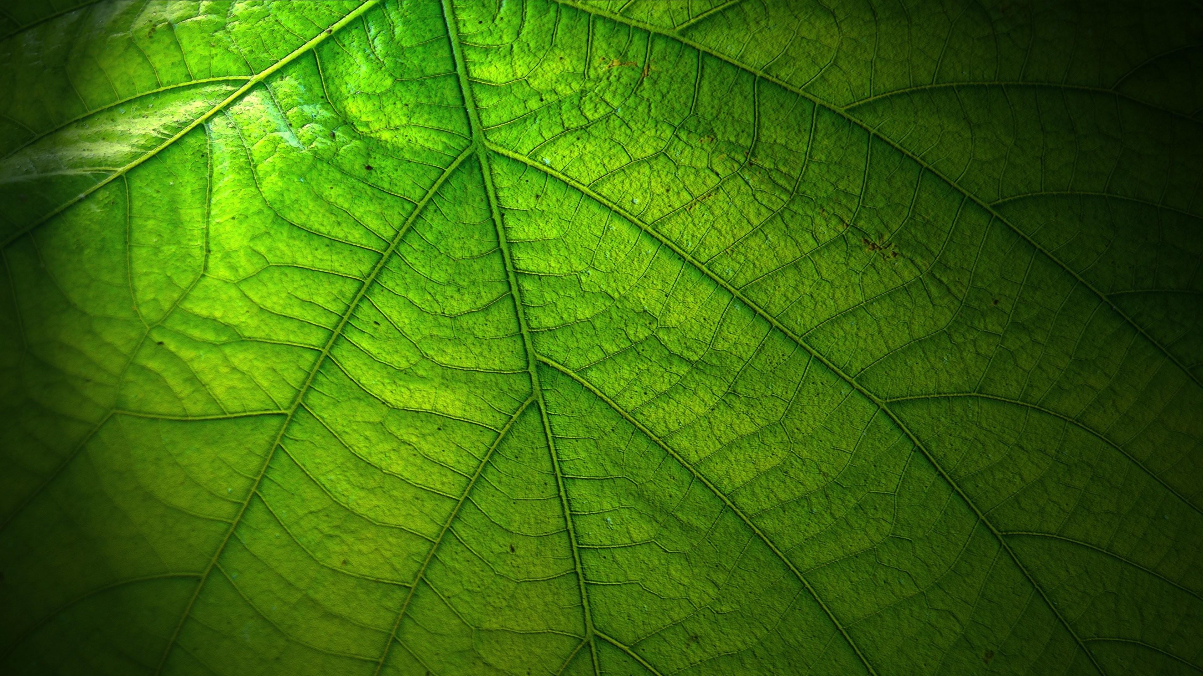 Leaf Wallpaper 58 Images