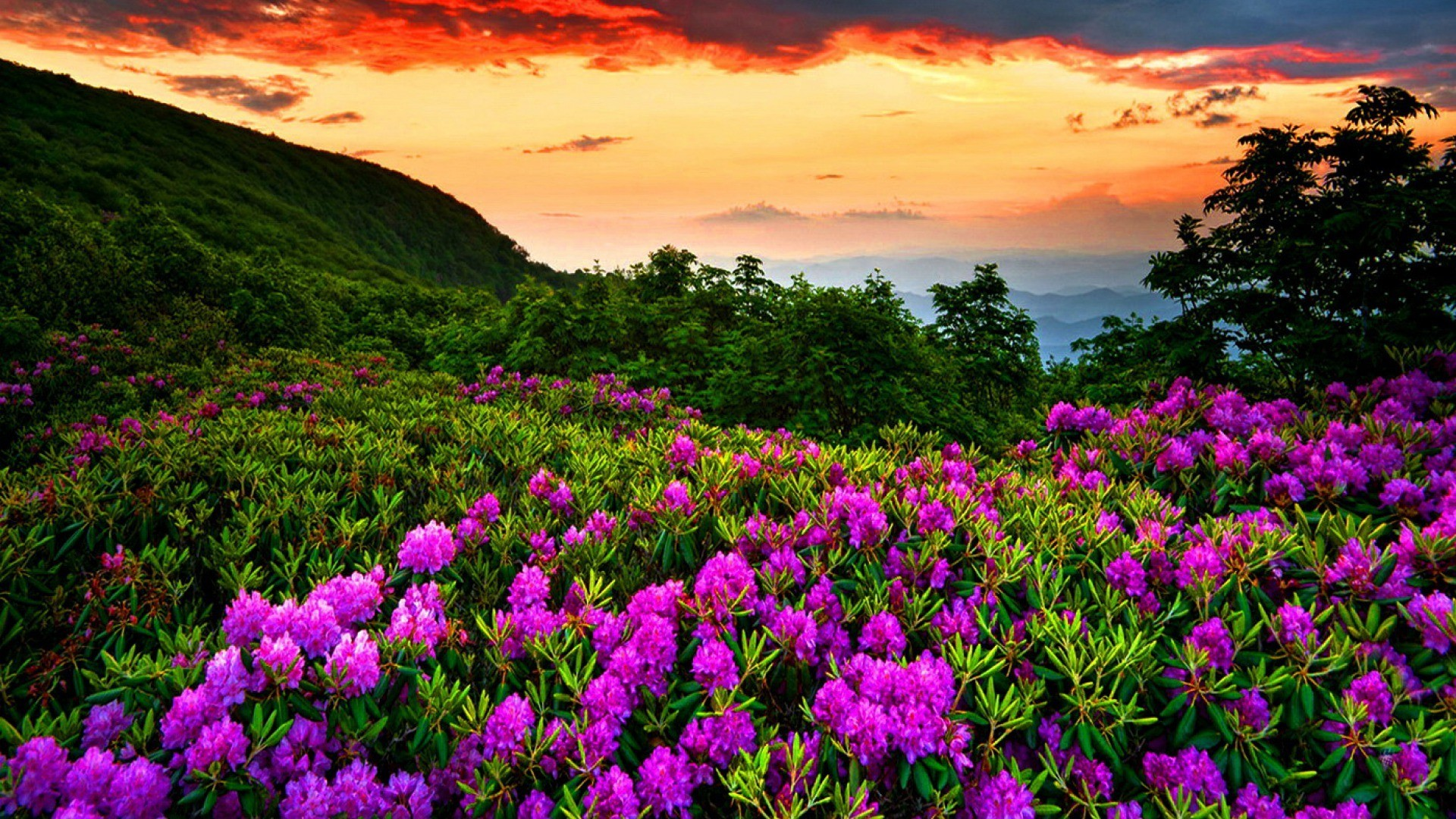 1920x1080 Spring Nature Live Wallpaper Android Apps on Google Play