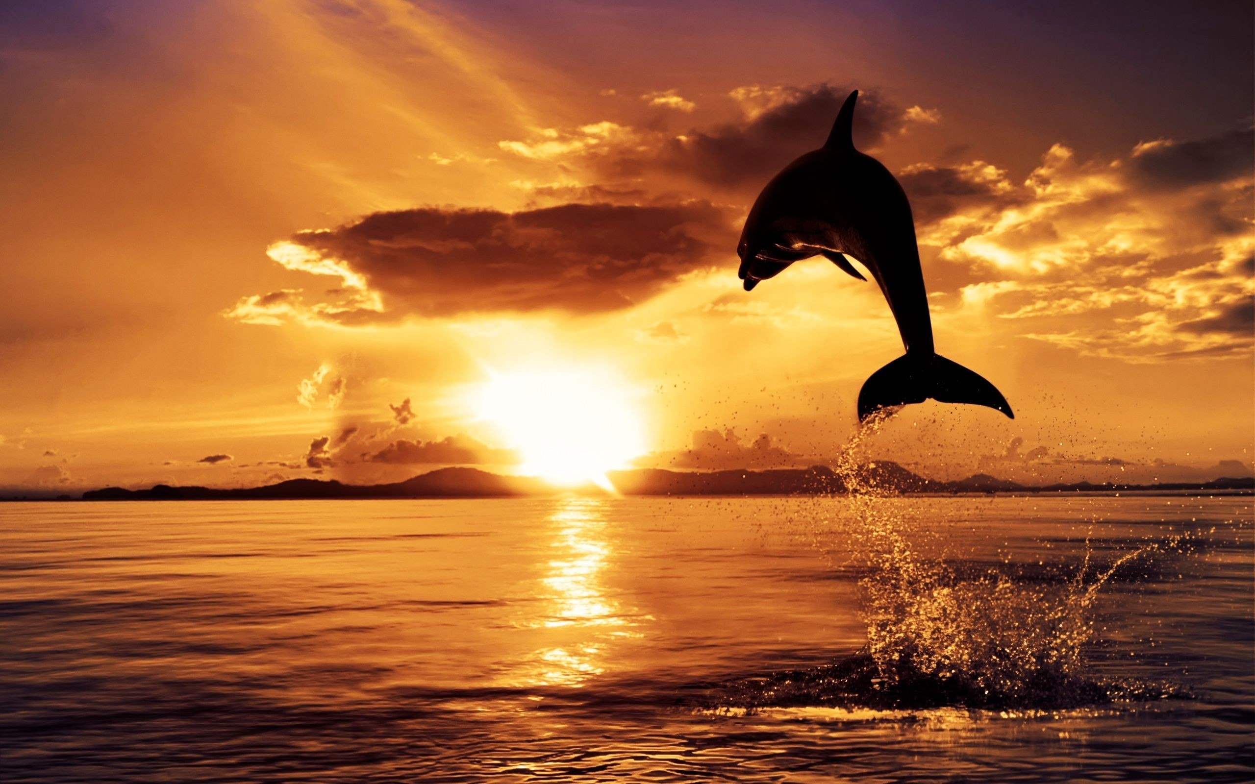 2560x1600 dolphin jumping in sunset - Dolphin Sunset Wallpaper