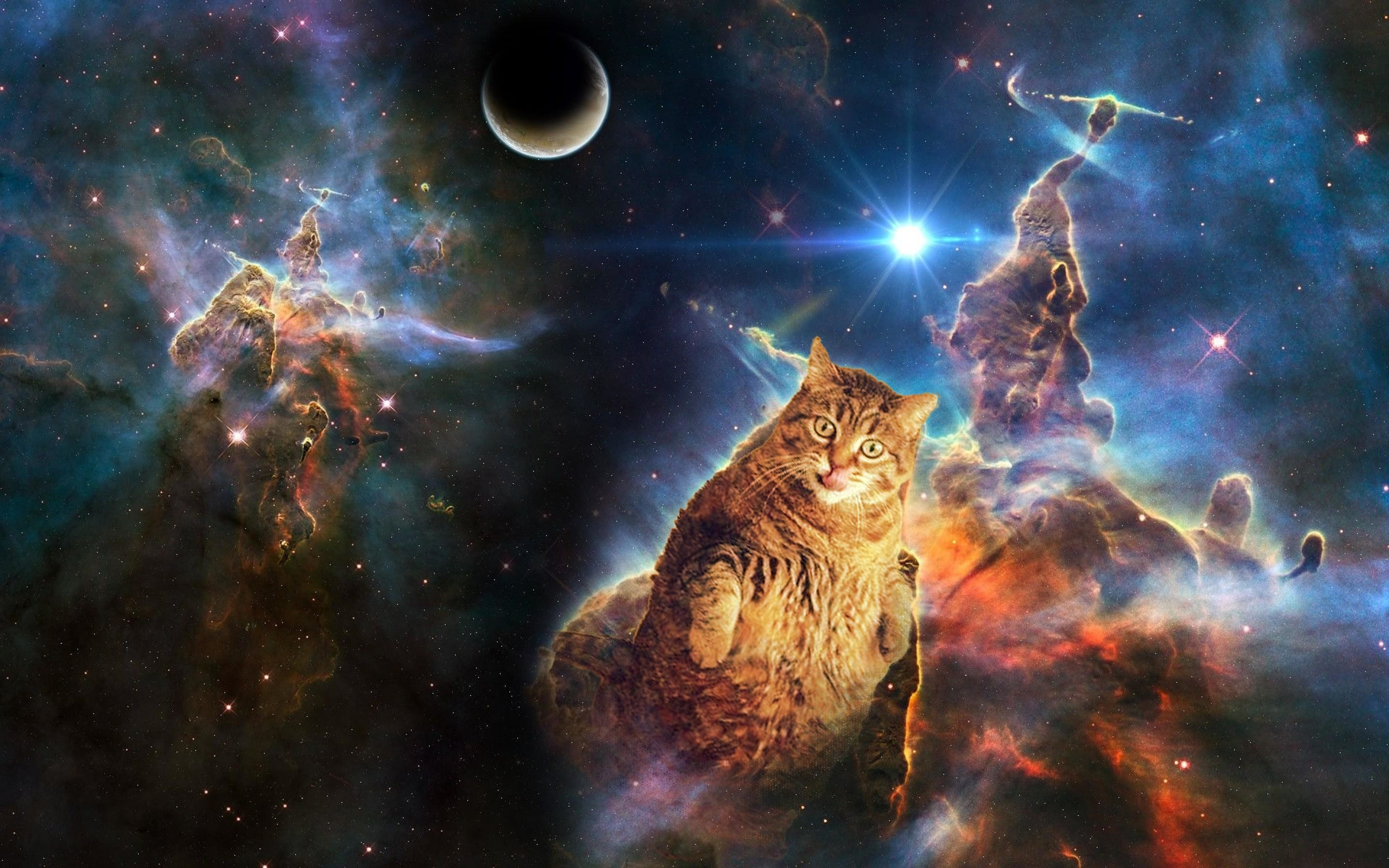 Space Cat Iphone Wallpaper 79 Images