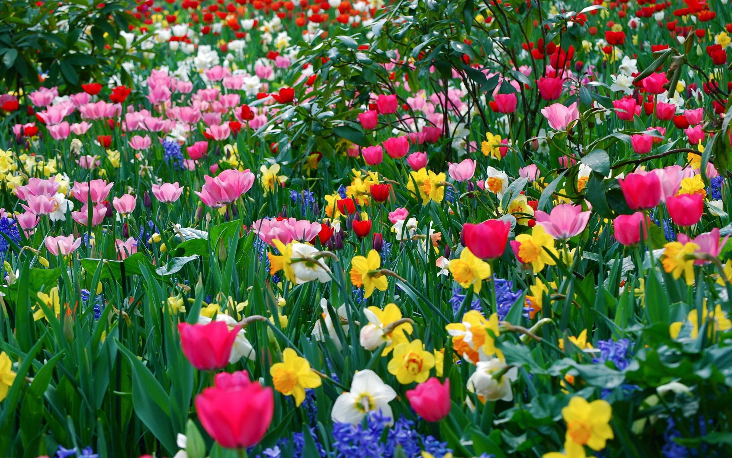 2560x1600 Colorful Flowers Wallpaper 7702