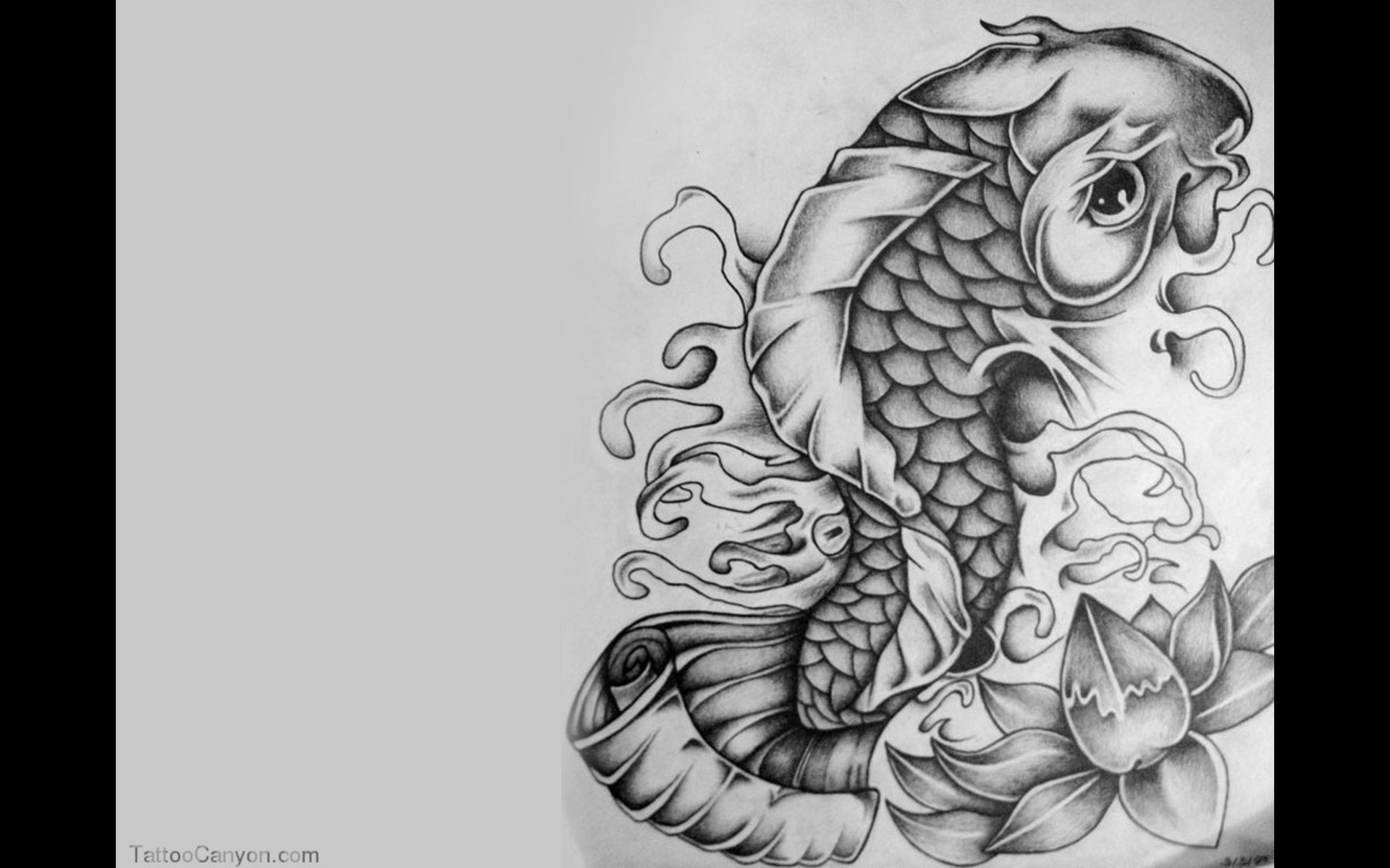 1920x1200 nice Koi Fish Background Computer