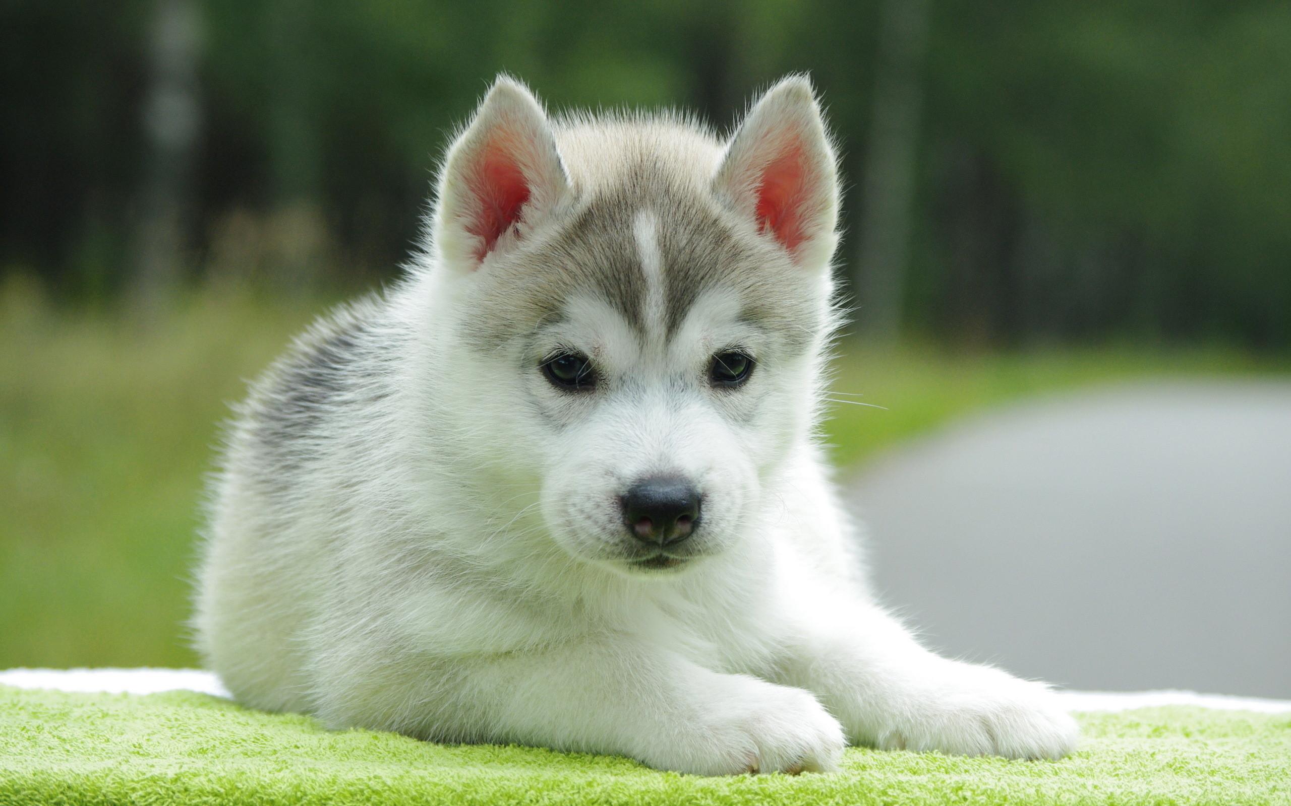 Cute puppy backgrounds for desktop