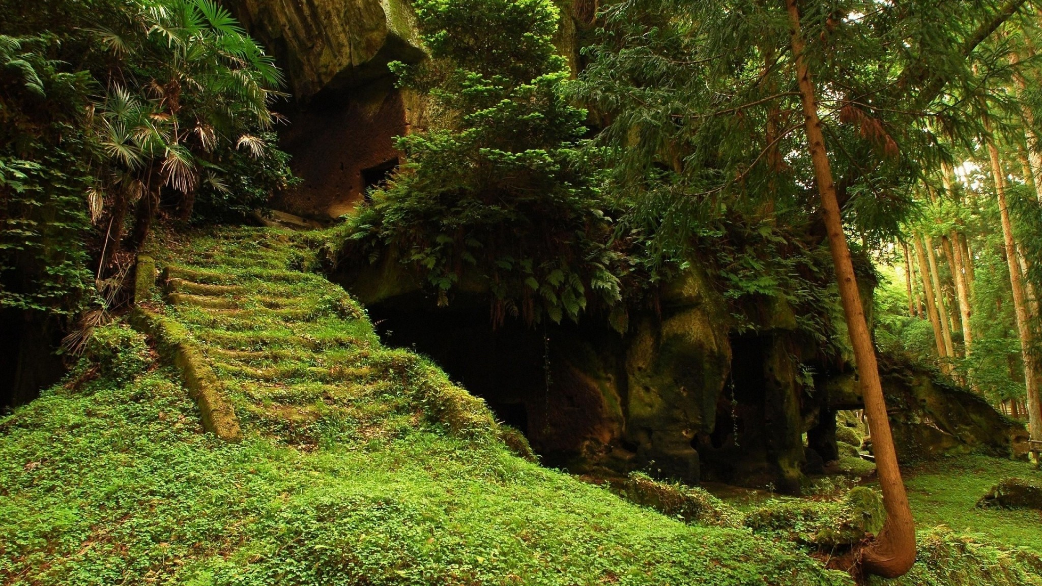 2048x1152 Preview wallpaper cave, moss, bushes, stairs, steps, vegetation, humidity