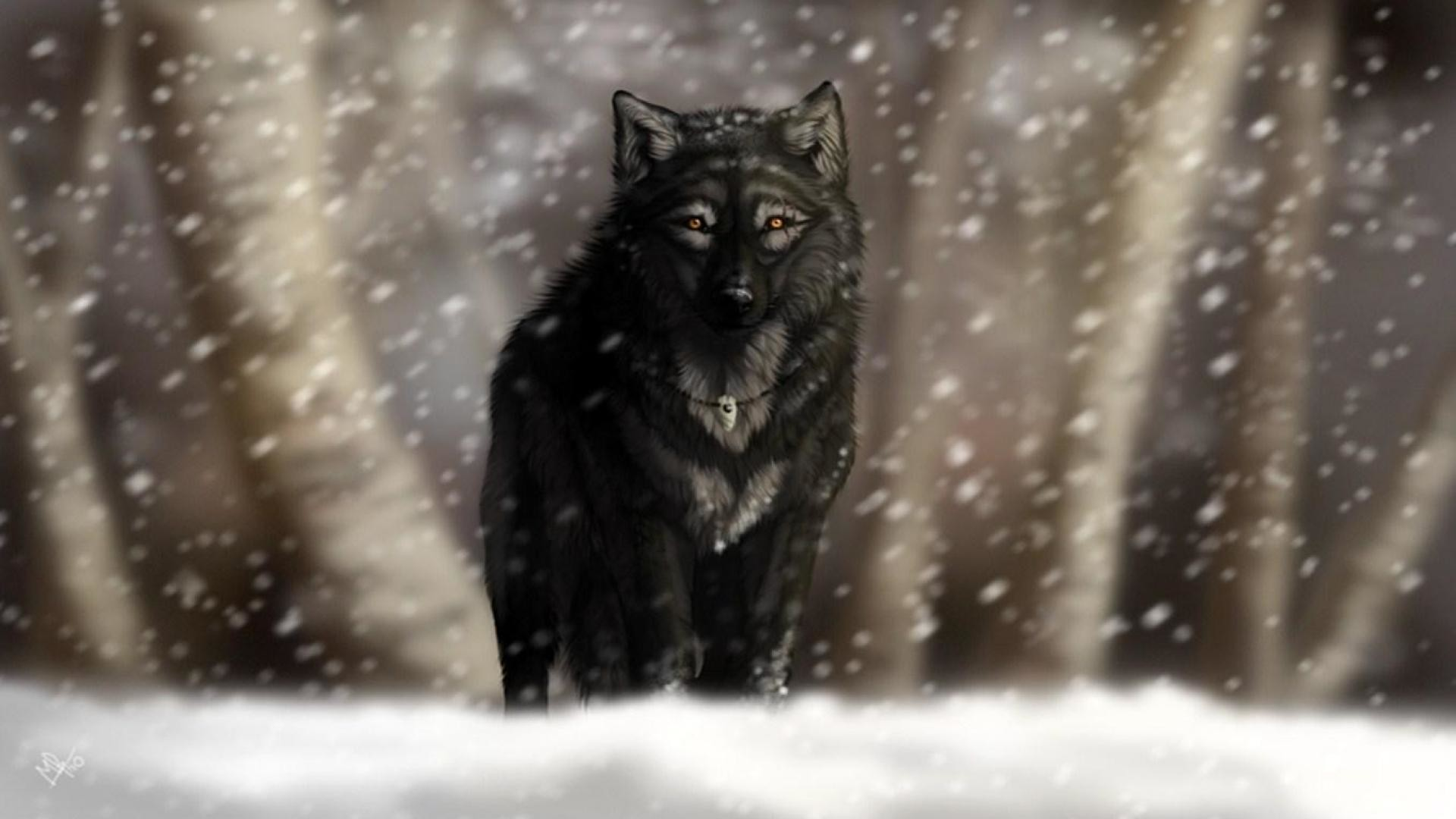 black wolf wallpaper 64 images