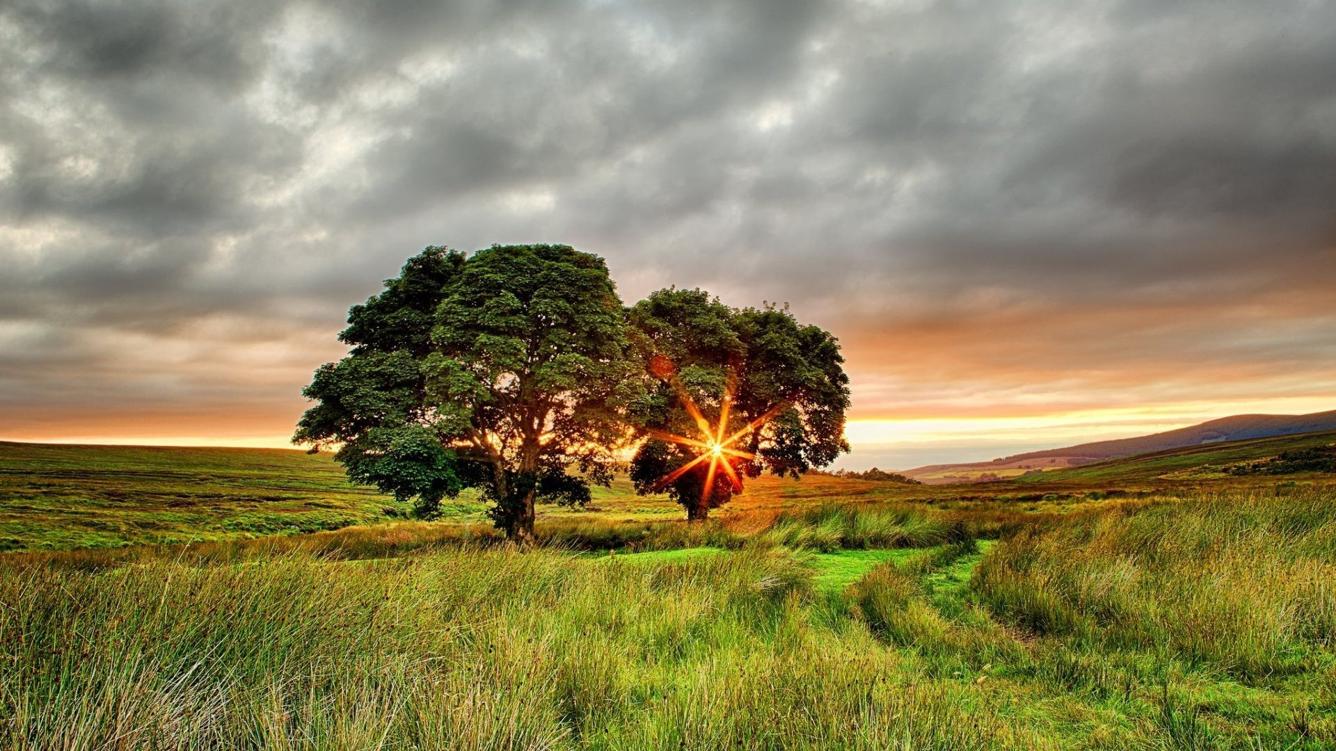 1920x1080 Ireland Tag - Summer Trees Ireland Field Two Nature Wallpaper For Mobile  Screen for HD 16