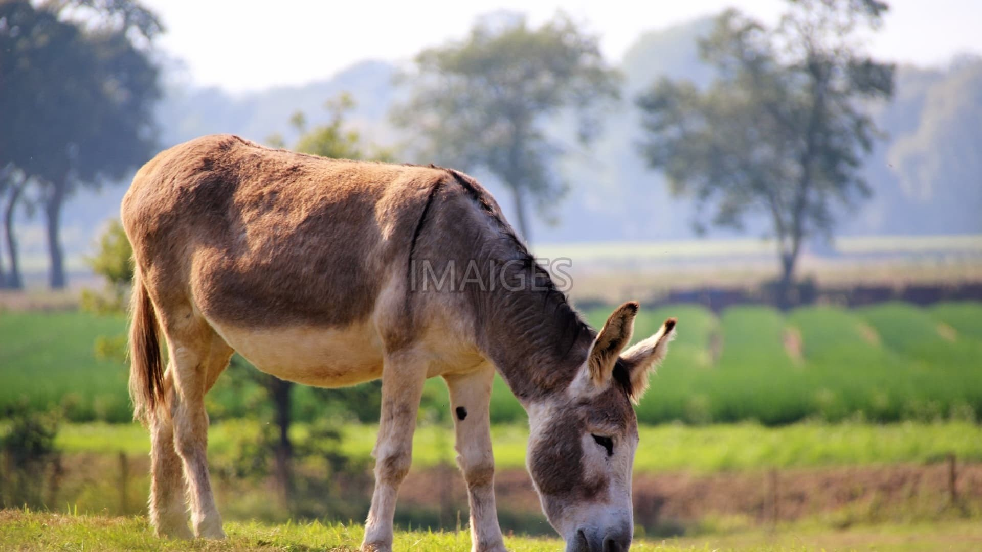 donkeys Reader approved how to care for a donkey three methods: choosing and handling a donkey providing food and shelter keeping your donkey healthy community q&a donkeys, with their sweet faces and gentle, intelligent natures, make wonderful pets.
