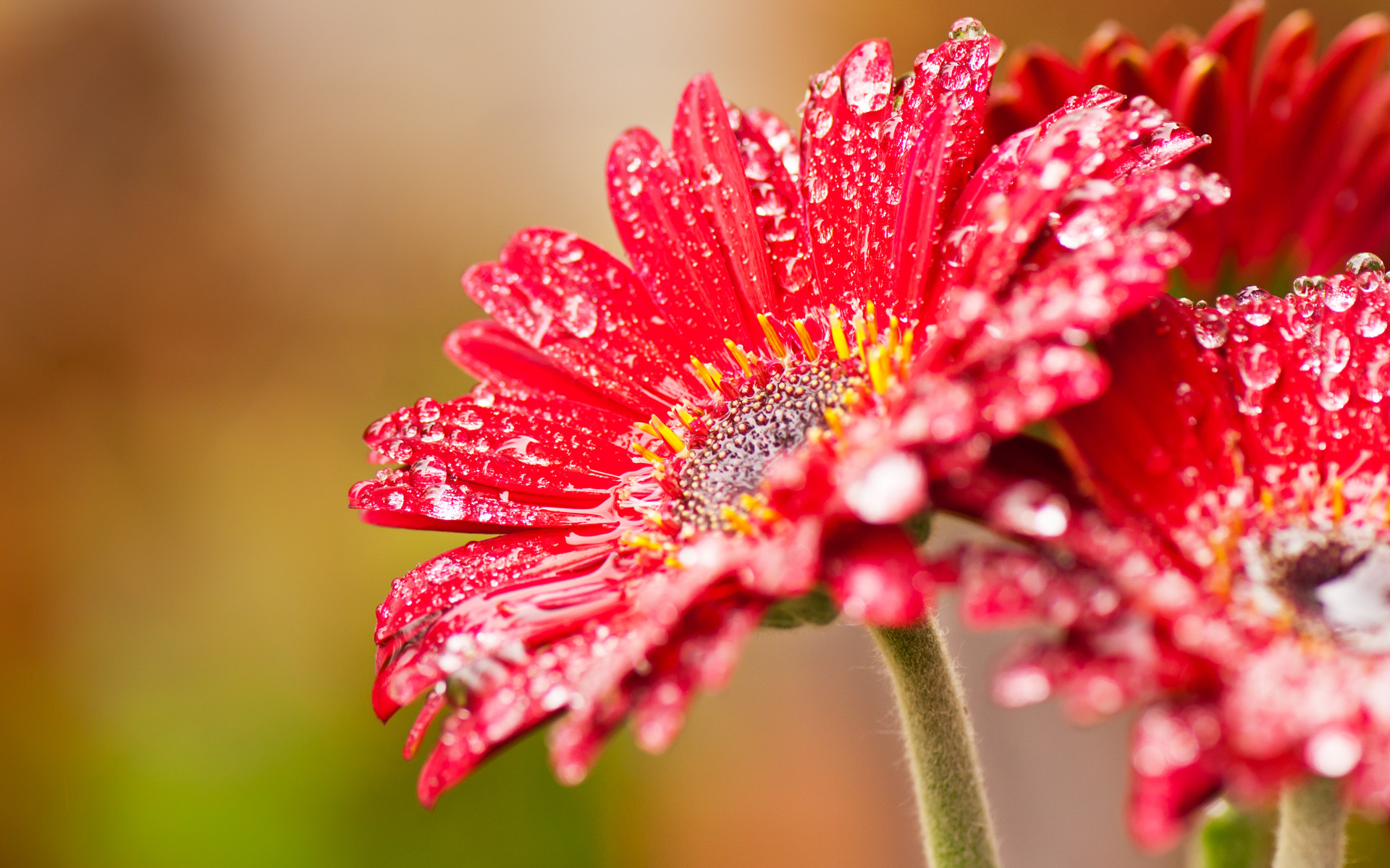 Red Flowers Wallpaper 65 Images