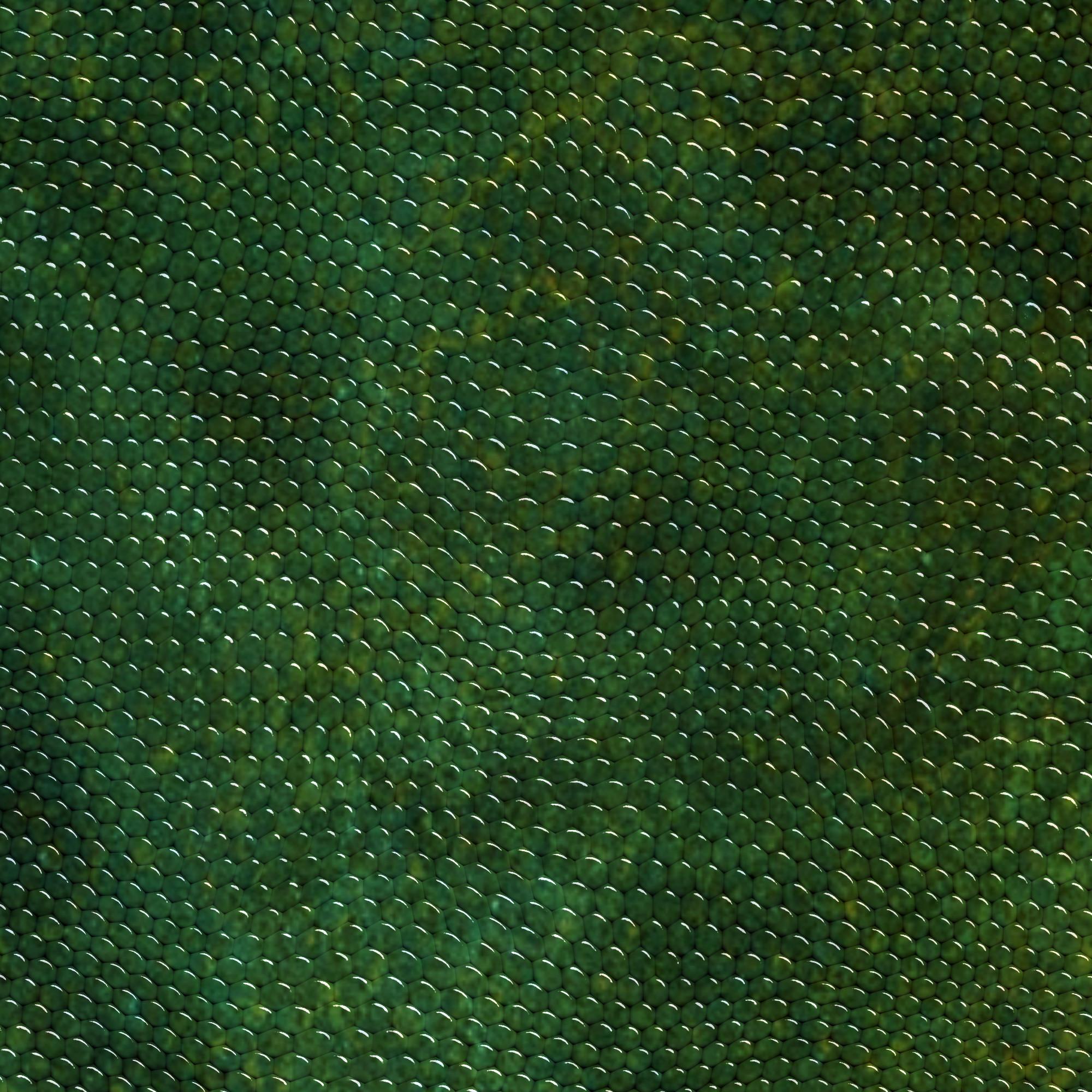 Black Snake Skin Wallpaper 55 Images