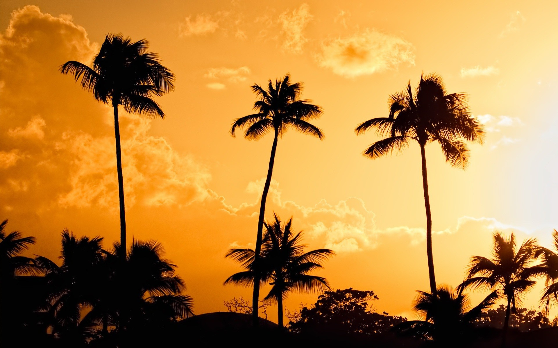 Beach palm trees wallpapers 58 images - Free palm tree screensavers ...