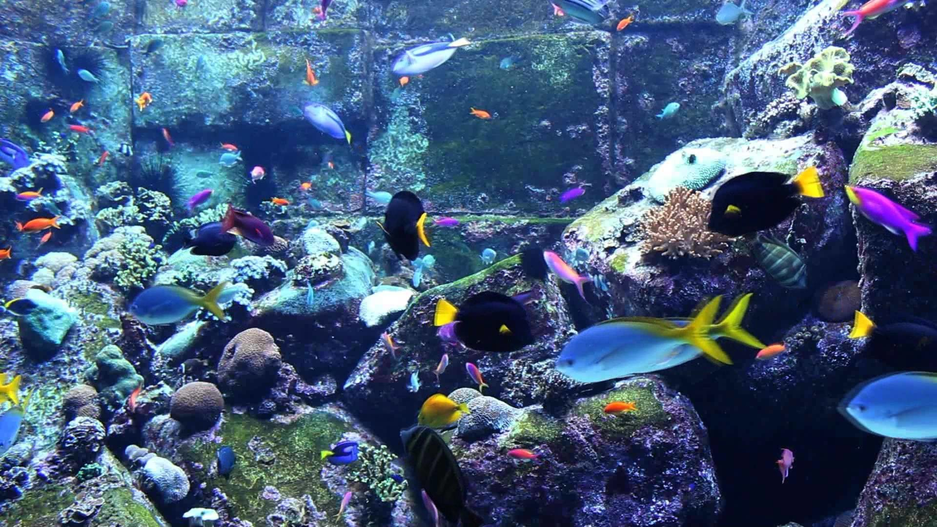Coral reef live wallpaper 59 images for Reef tank fish