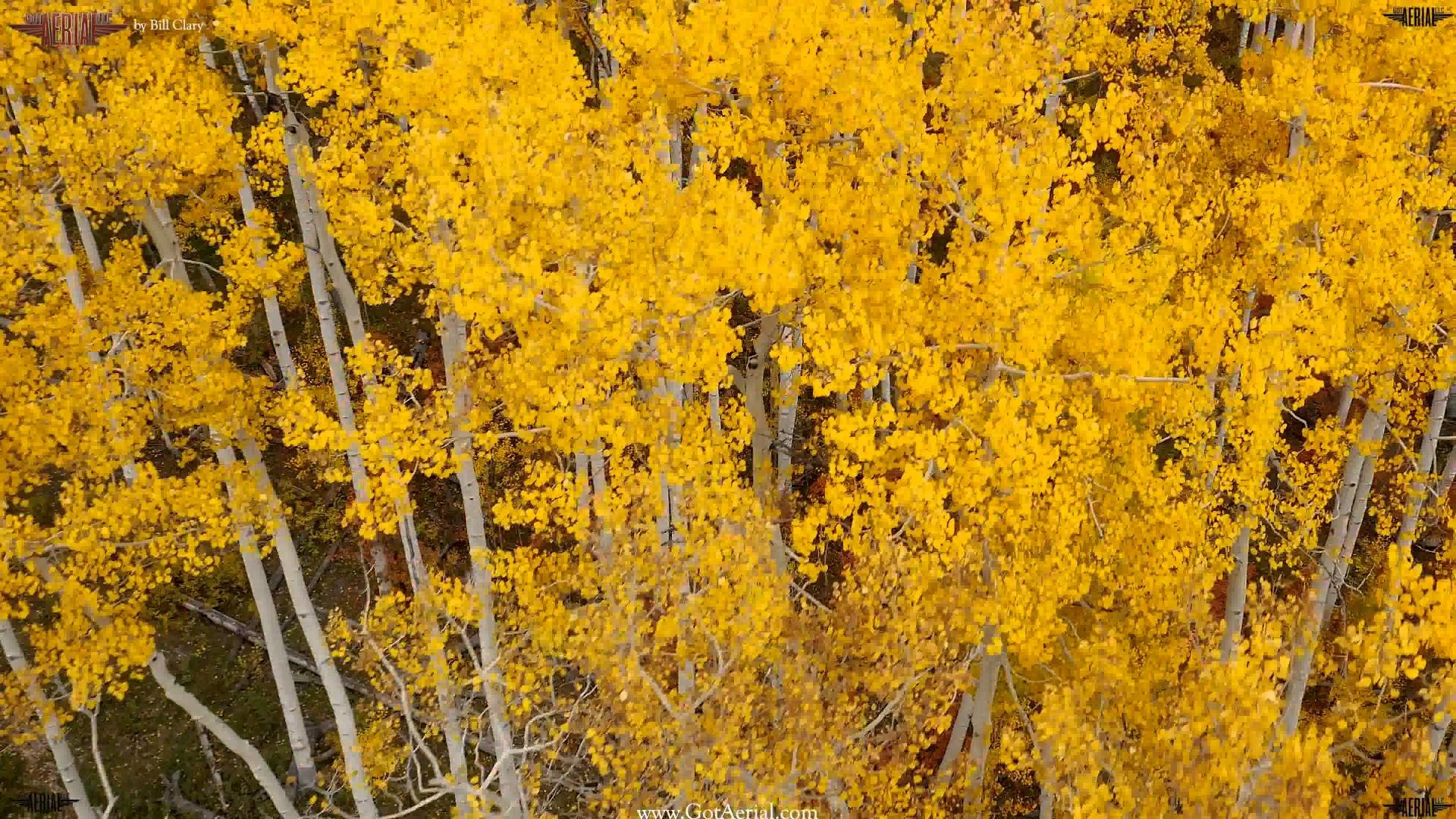 "1920x1080 4K HD Drone ""Changing of the Aspen Trees"" by Bill Clary www gotaerial com -  YouTube"