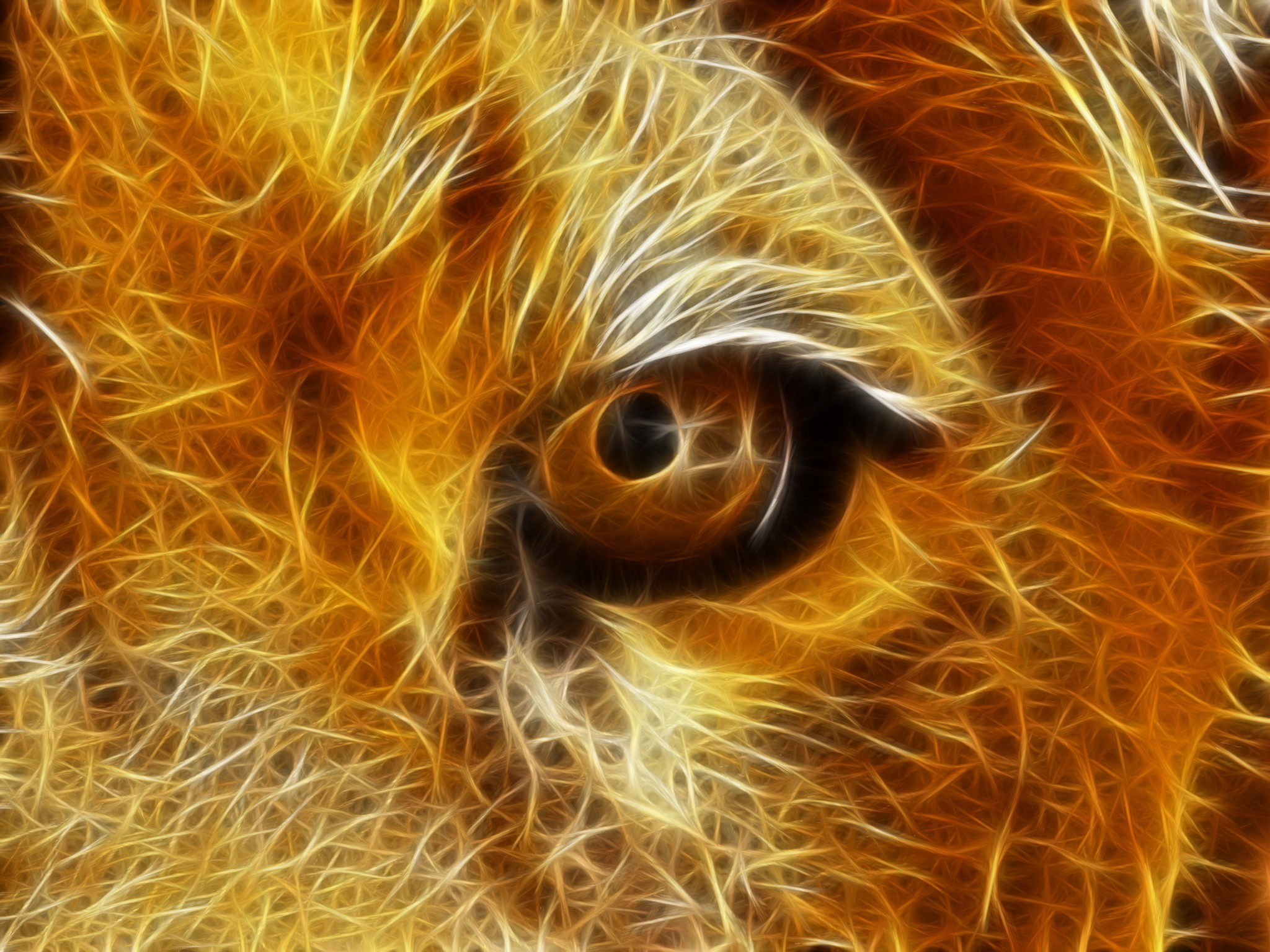 Angry Lion Eyes Wallpaper (60+ images)
