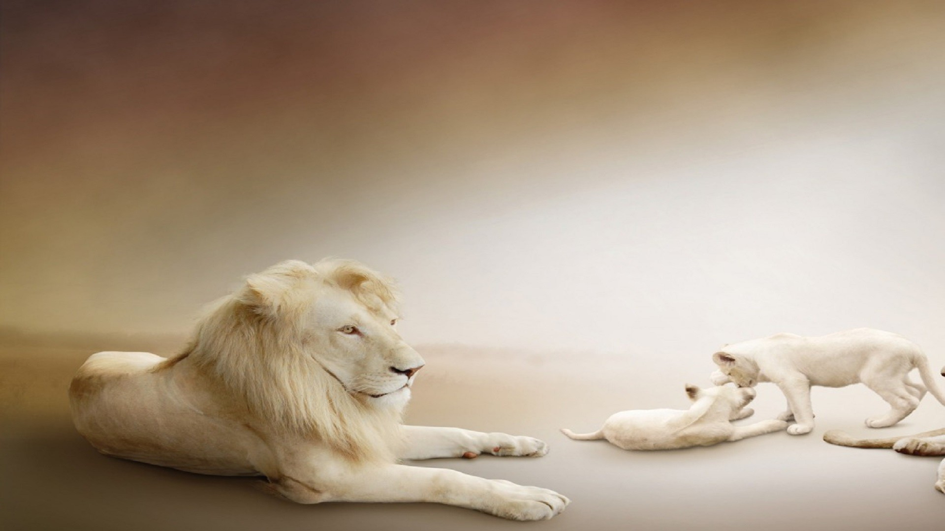 1920x1080 Beautiful-Lion-Cubs-Picture-hd-free-wallpapers