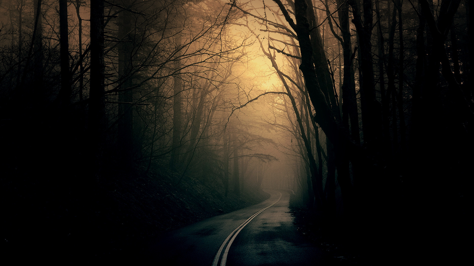 1920x1080 Theme Bin» Blog Archive » Dark Forest Road HD Wallpaper