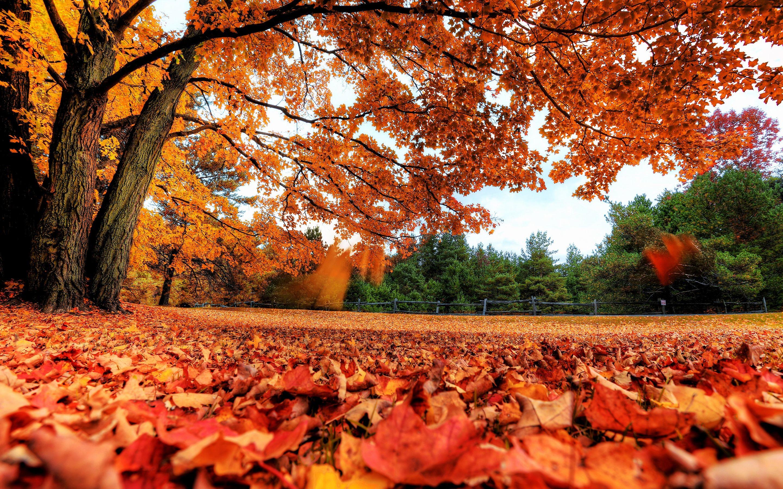 autumn season - photo #27