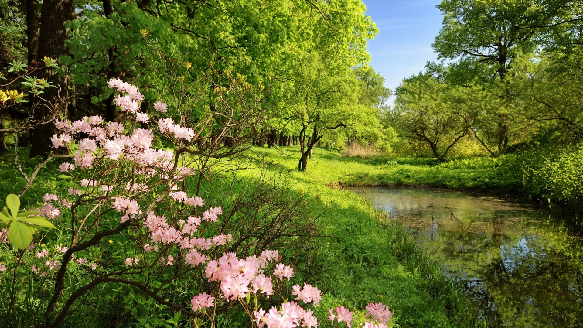 1920x1080 Preview wallpaper spring, branches, colors, wood, trees, pond, water,