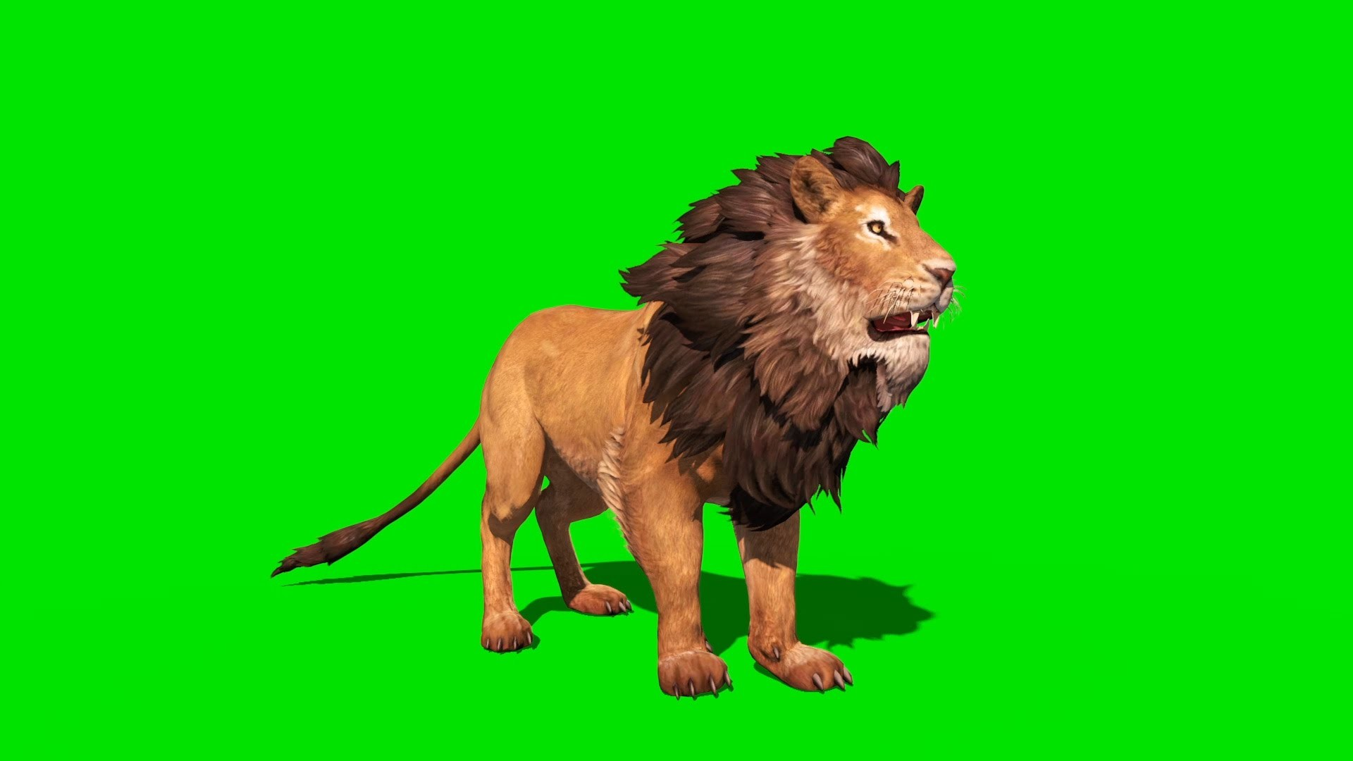 1920x1080 Green Screen Ferocious Lion Runs Attacks and Roars - Footage PixelBoom -  YouTube