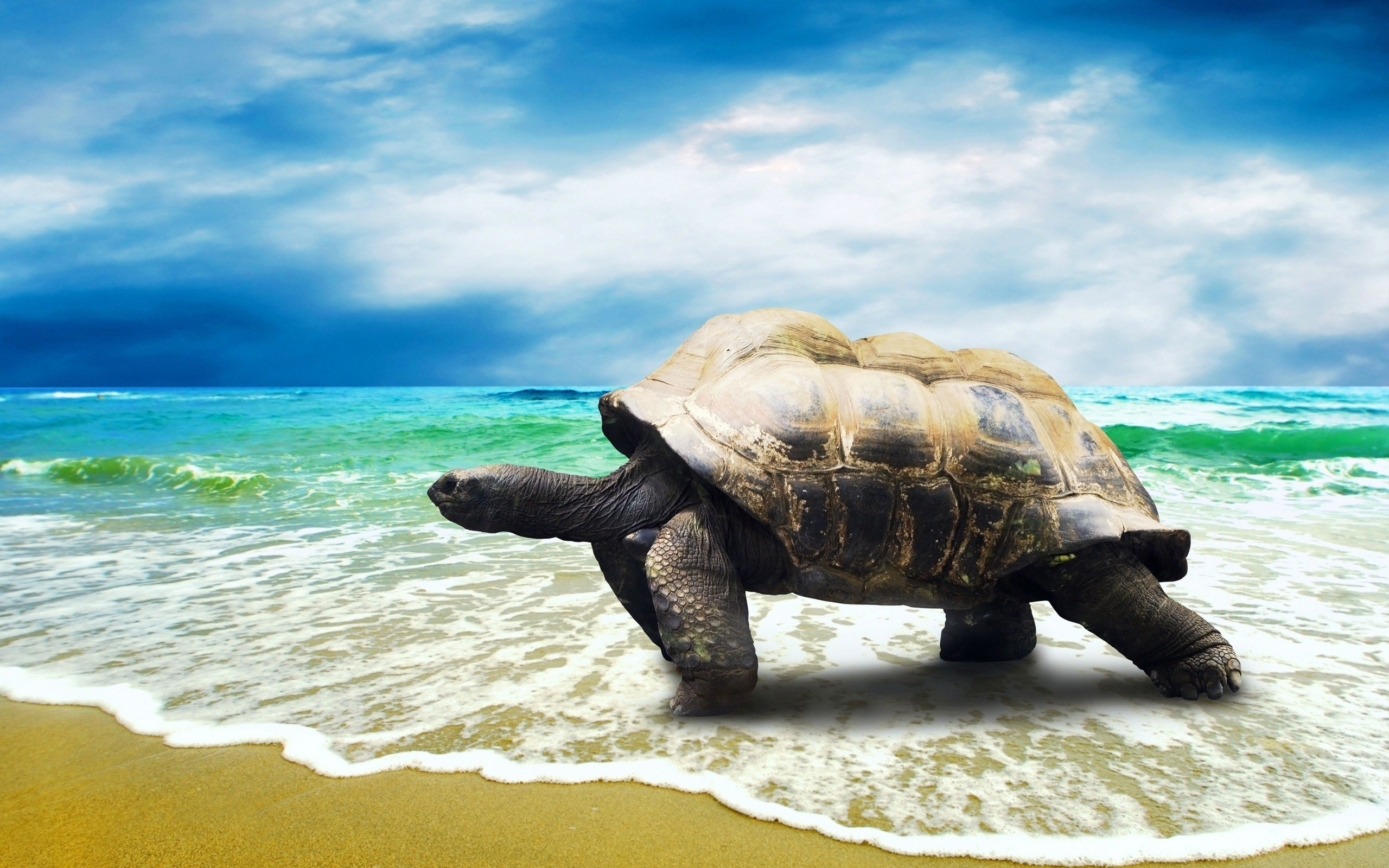 Baby Sea Turtle Wallpaper (55+ images)