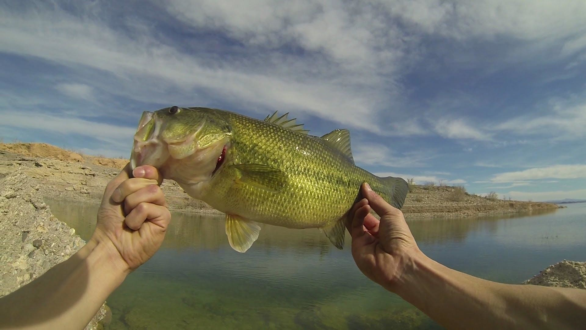 Bass Fishing Wallpaper HD (62+ images)