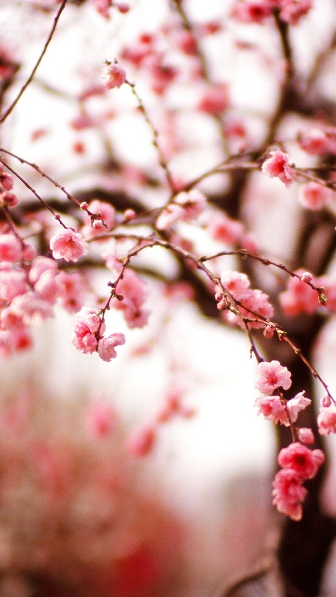 Res: 1080x1920, Cherry Blossom, Branches, Blurred, Sakura