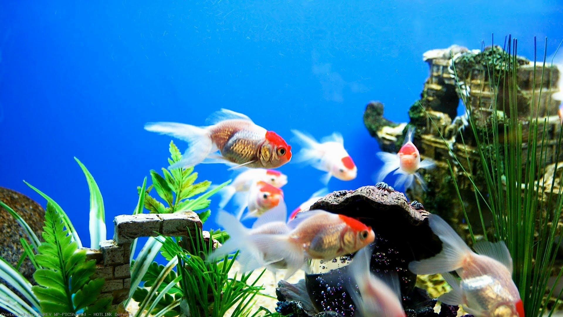 aquarium wallpaper free download for pc windows 8 enterprise 1920x1080 free live wallpapers for android