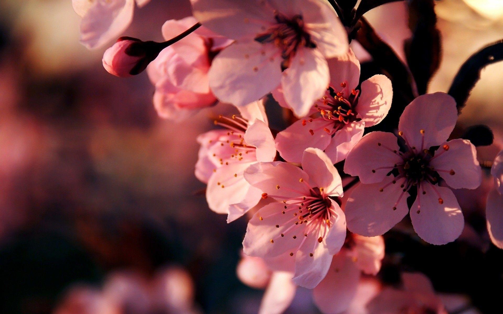 Pink Flower Desktop Wallpaper 70 Images