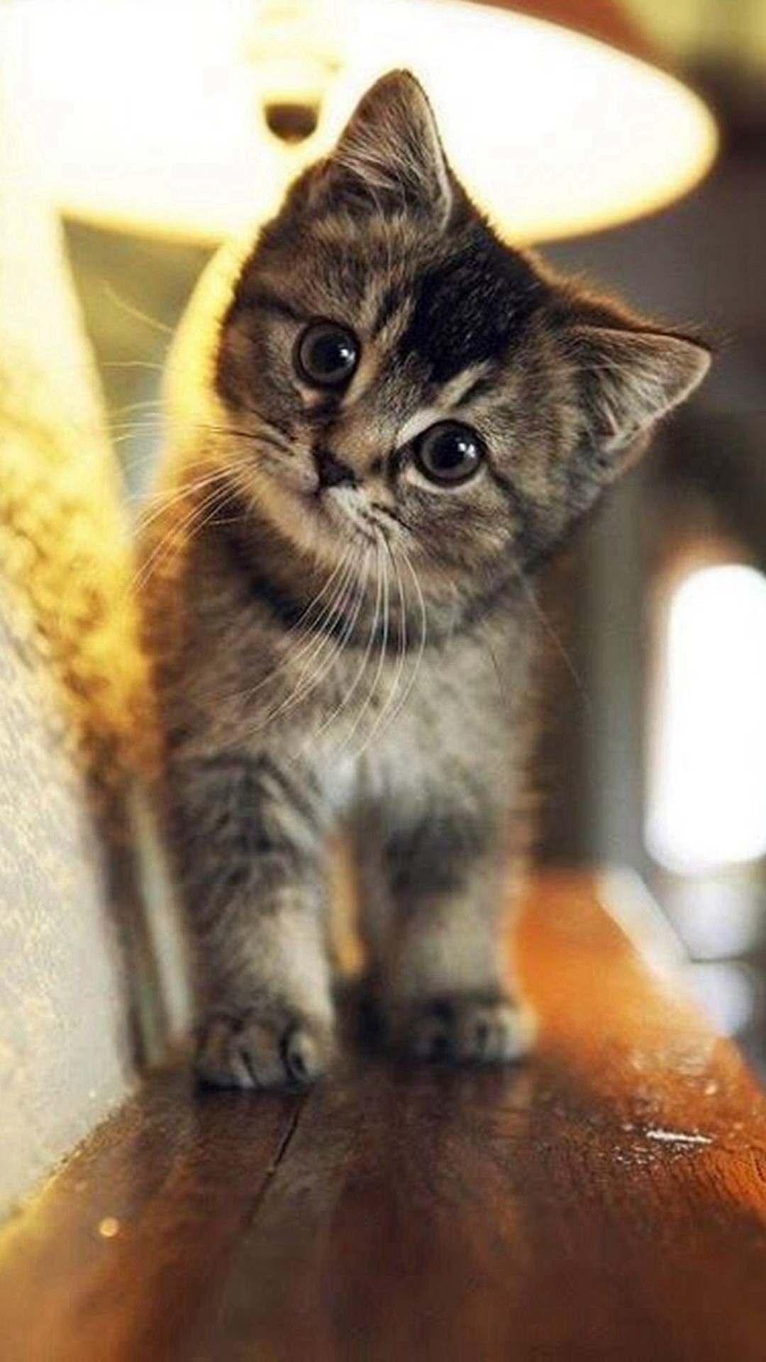 1080x1920 Cute Stare At Cat Animal #iPhone #6 #plus #wallpaper