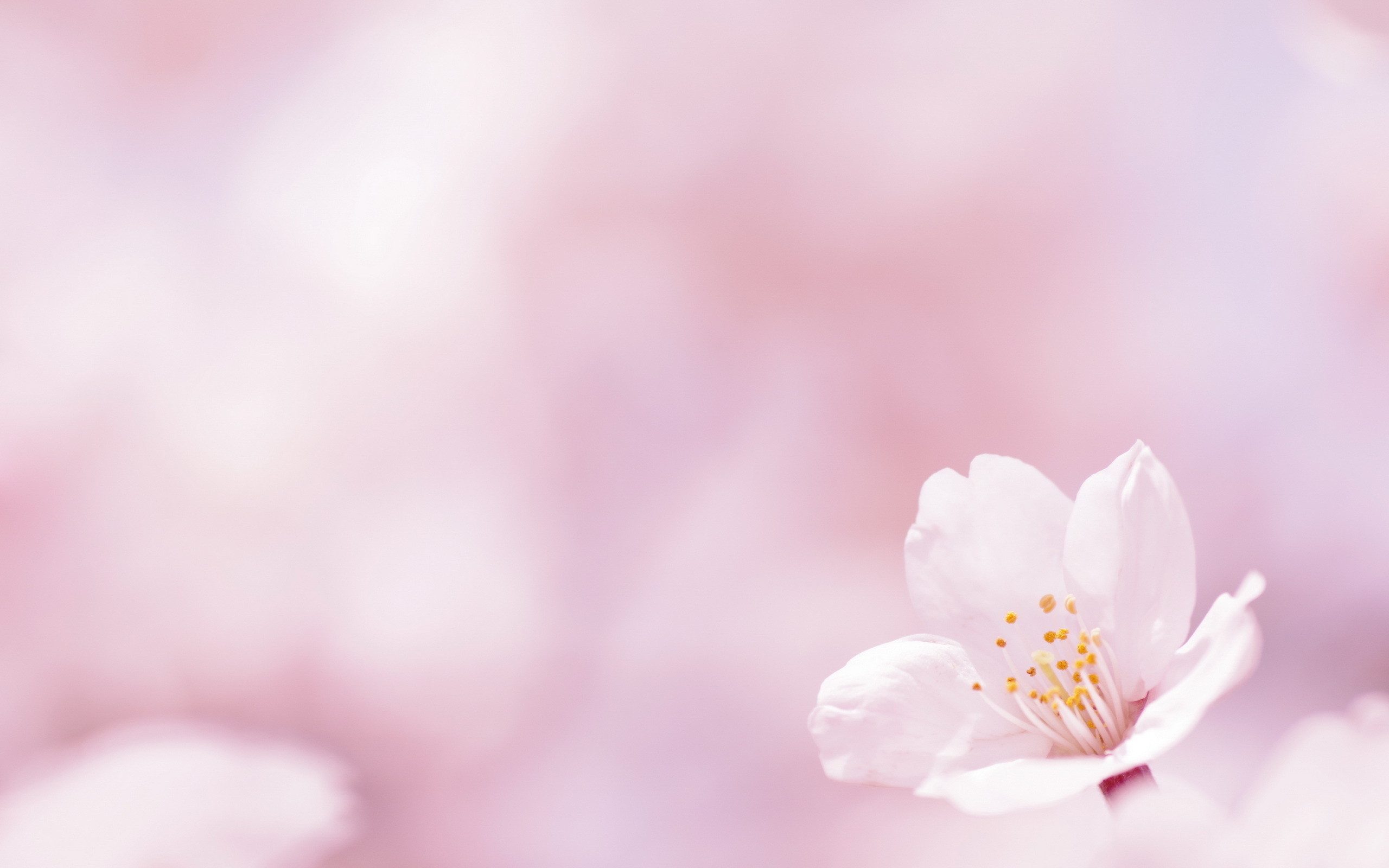 Spring Background Images 55 Images