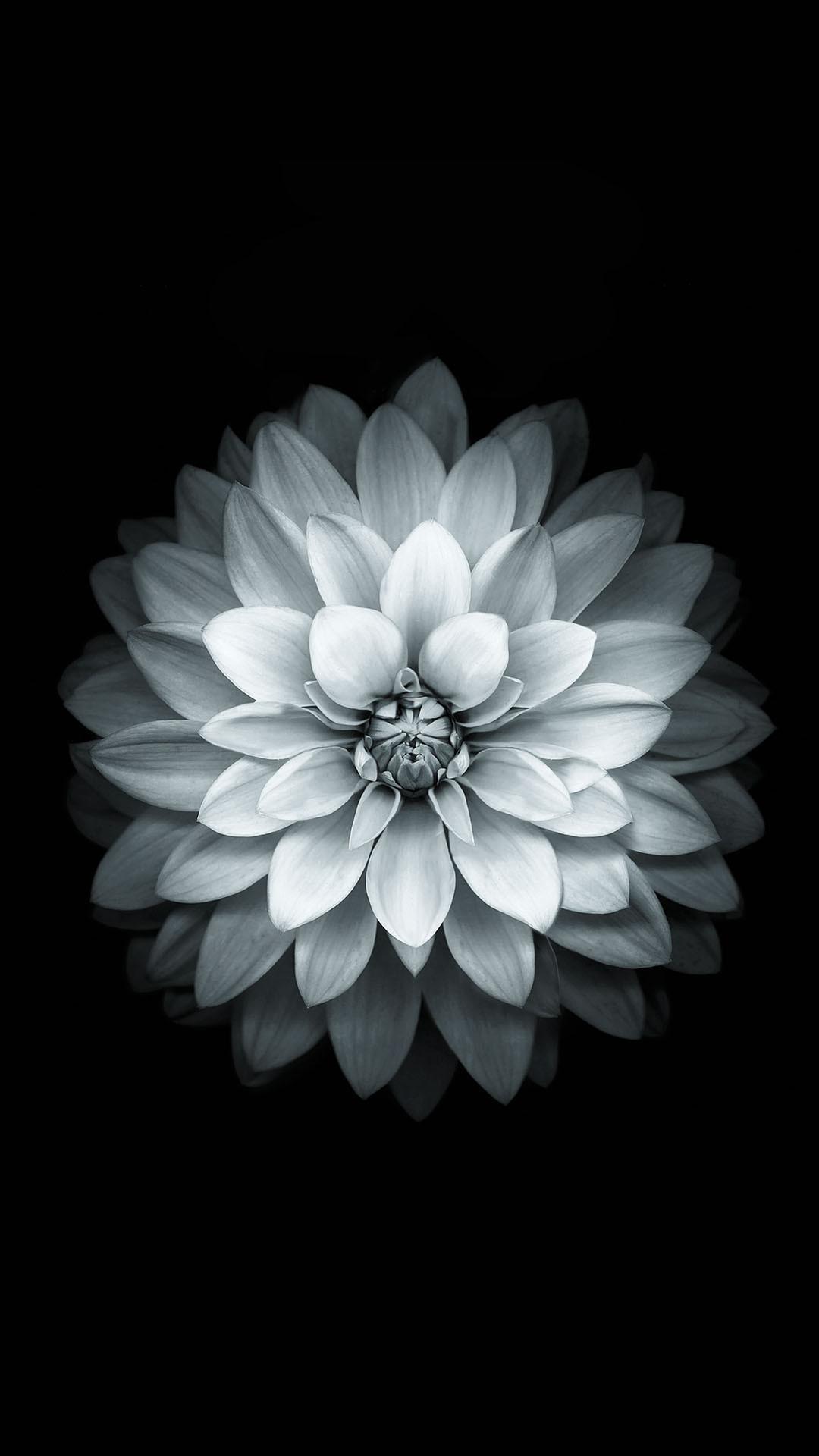 1080x1920 black white apple lotus flower android wallpaper