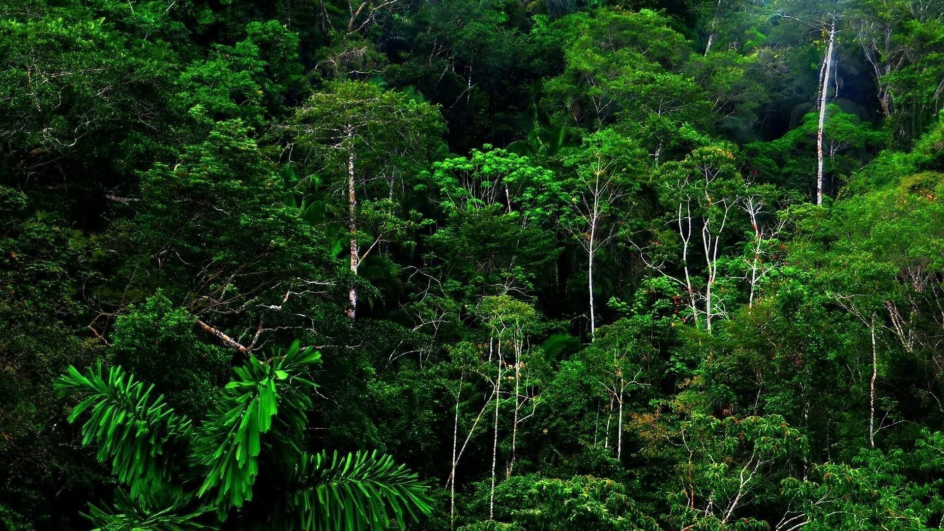 Rainforest Backgrounds 60 Images