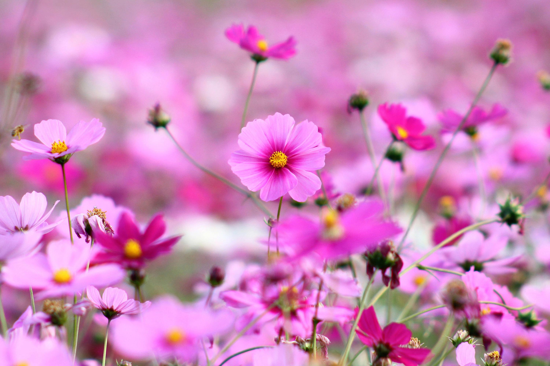 3000x2000 Beautiful Flower Wallpapers For Desktop Full Screen