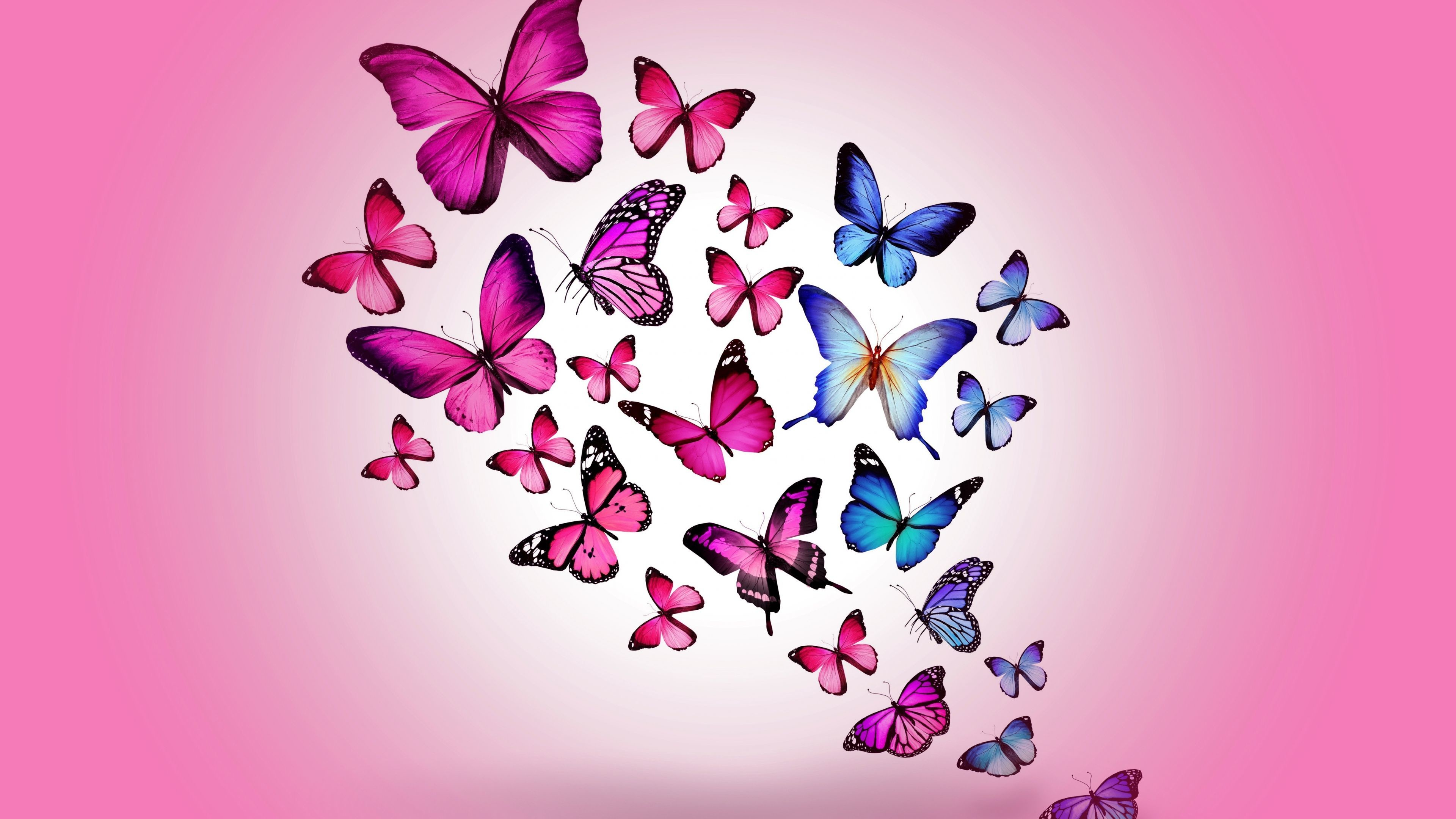 Pink Butterfly Wallpaper Desktop 84 Images