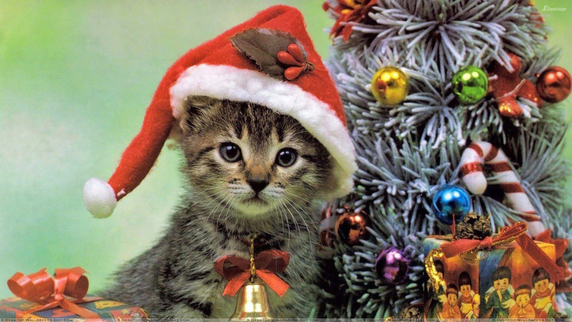 Computer Desktop Backgrounds Christmas Cats Wallpaper
