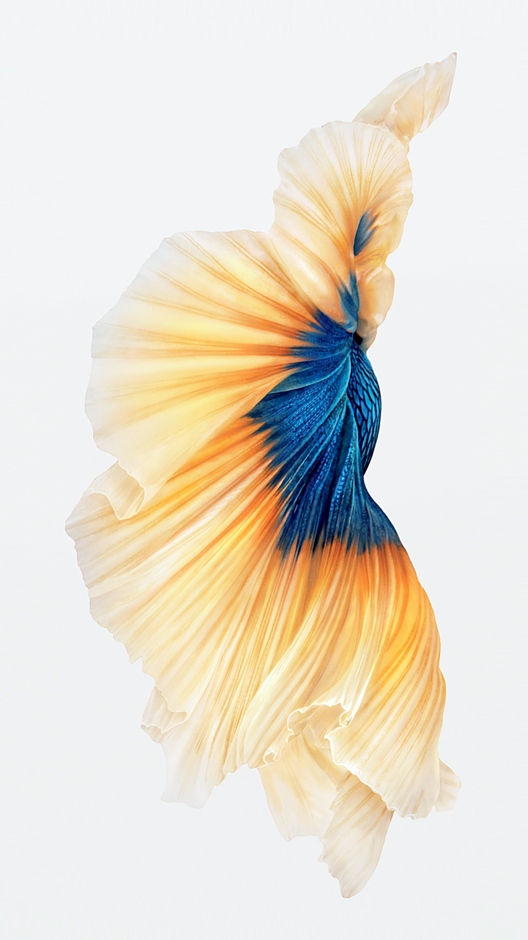 iphone 6s fish wallpapers (75 images)1080x1921 iphone 6s fish gold wallpaper download iphone iphone