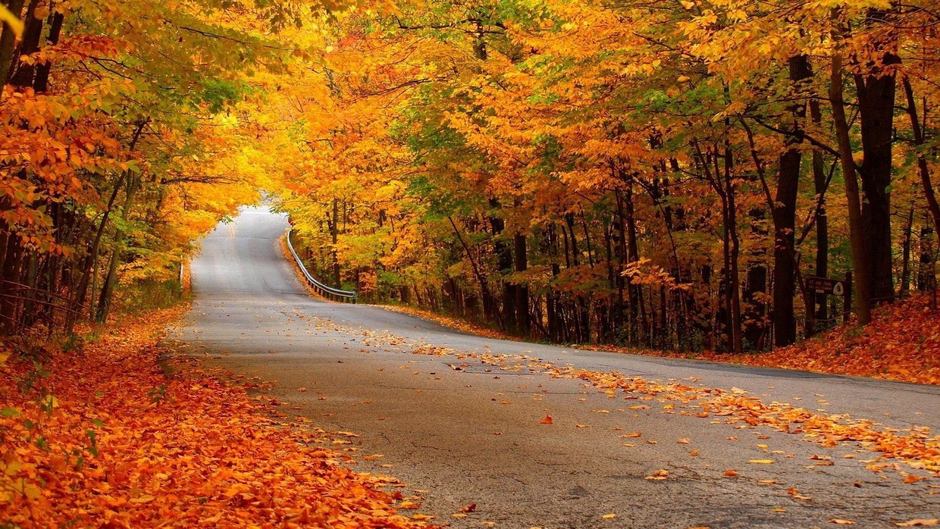 1920x1080 0  Autumn Forest Scenery Wallpaper  Autumn Forest Street  Wallpaper