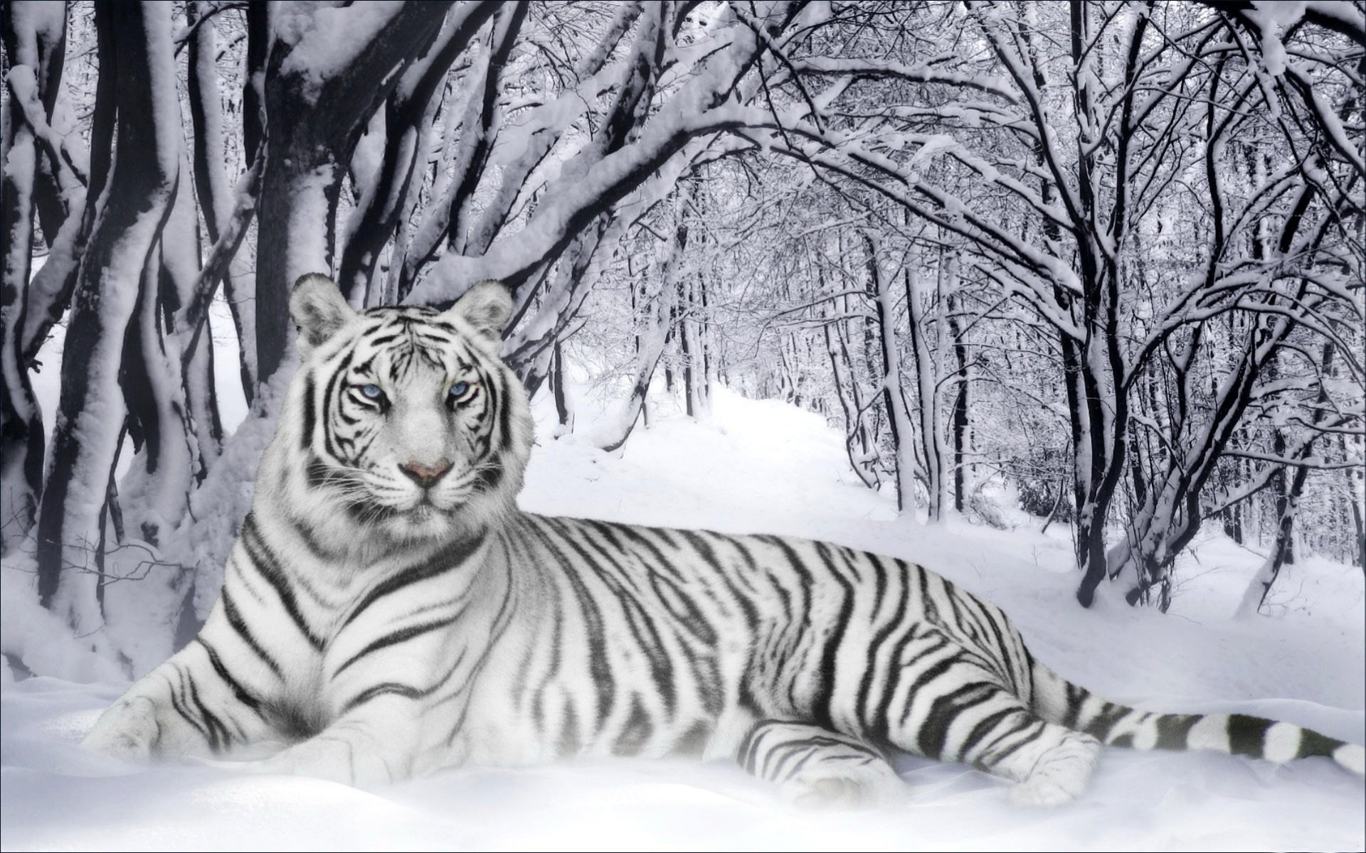 1920x1200 Winter animal desktop Backgrounds