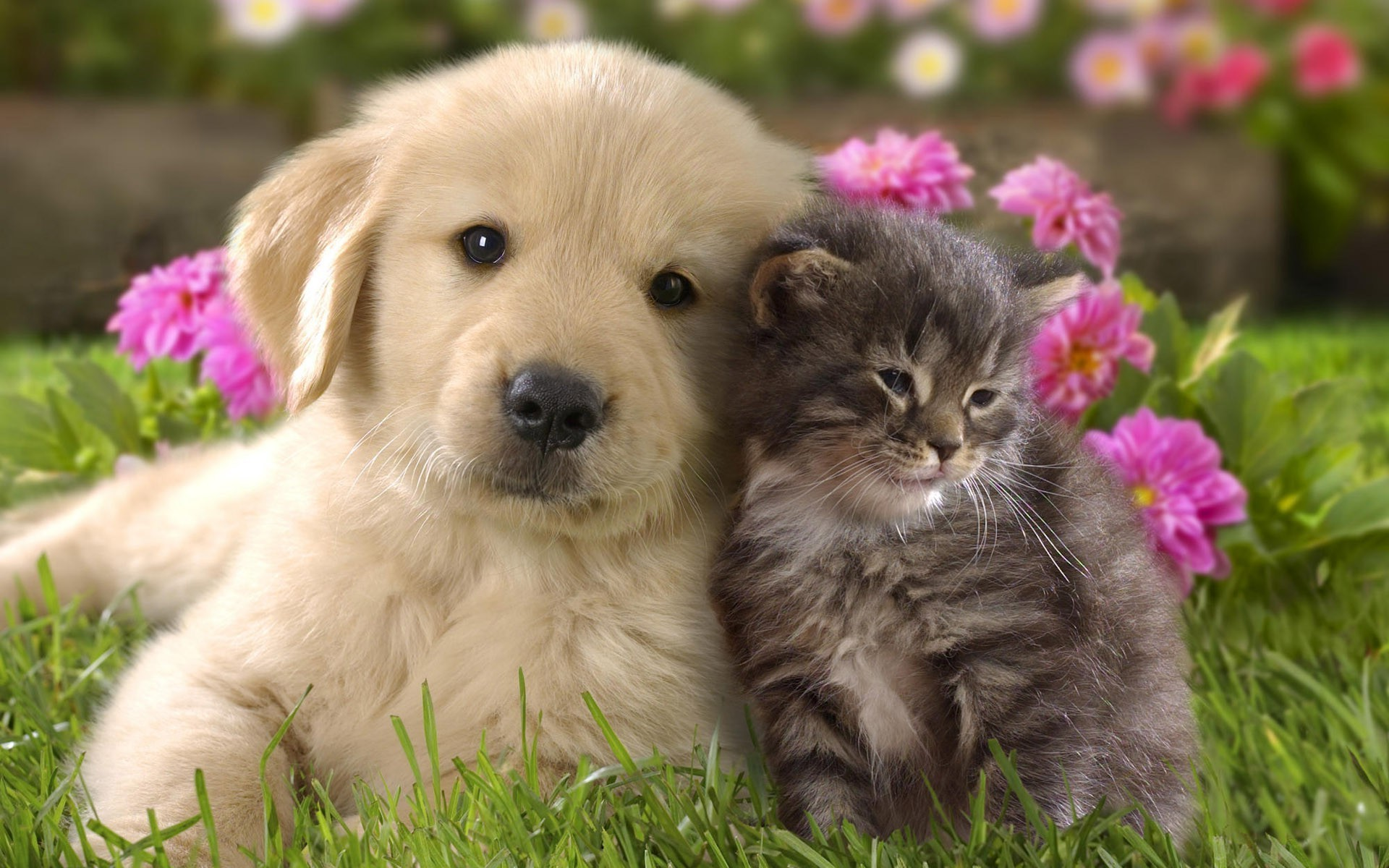1920x1200 Free Cute Dog and Cat Wallpaper HD