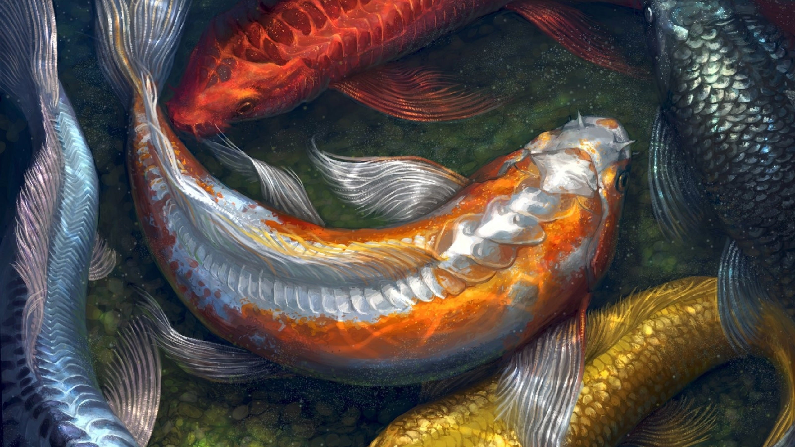 2560x1440 ... fish HD Wallpaper  Koi ...