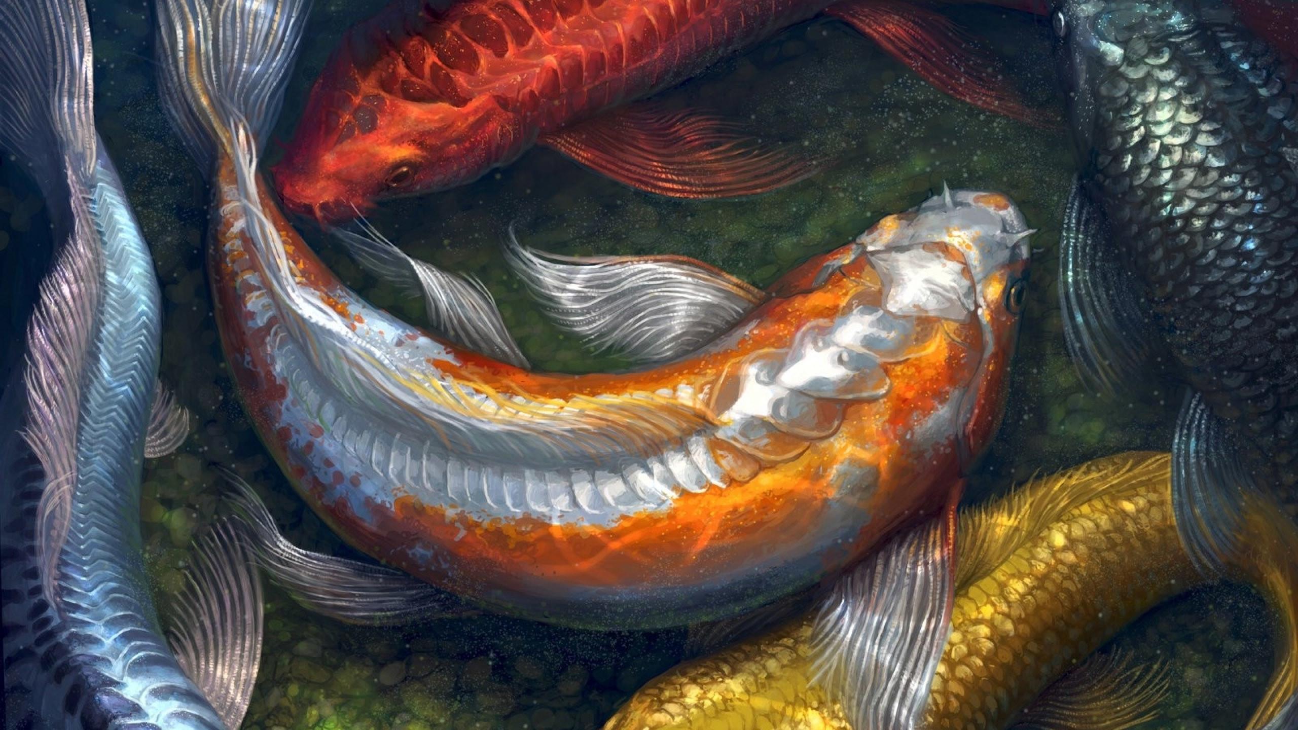 Hd Koi Fish Wallpaper 54 Images