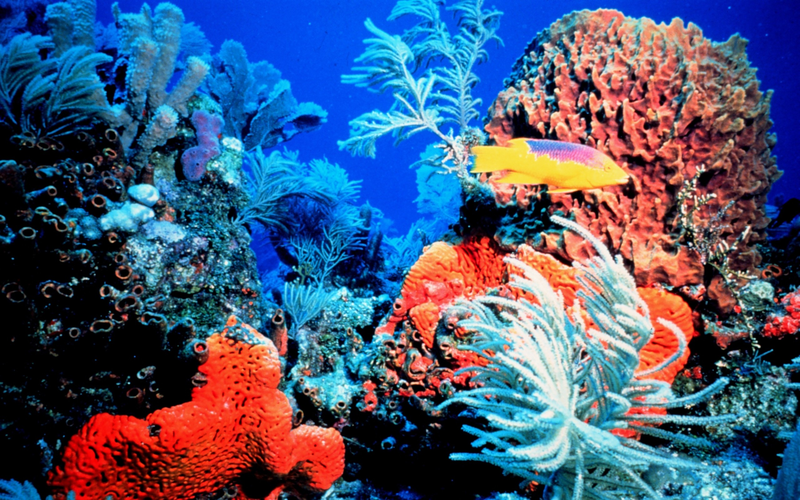2560x1600 Colorful Coral Reef